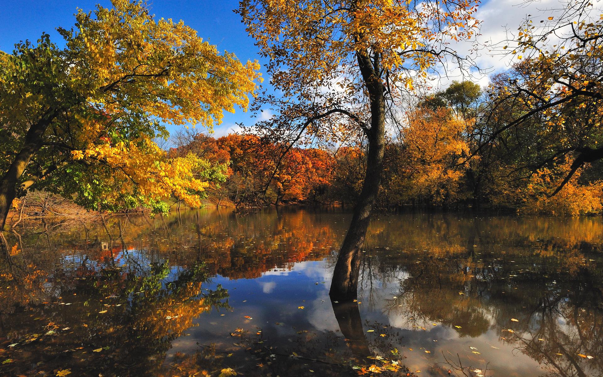 Природа осени фотографии высокого качества