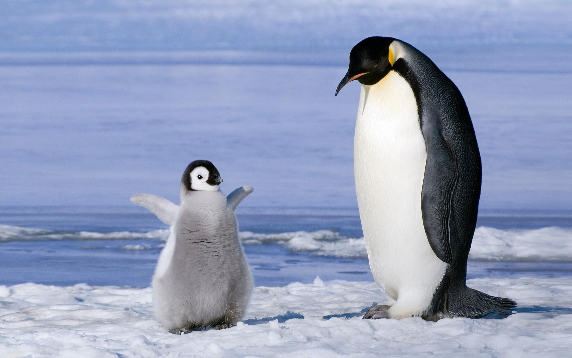 вынослив неприхотлив, картинка животные арктики и антарктики ресторане есть