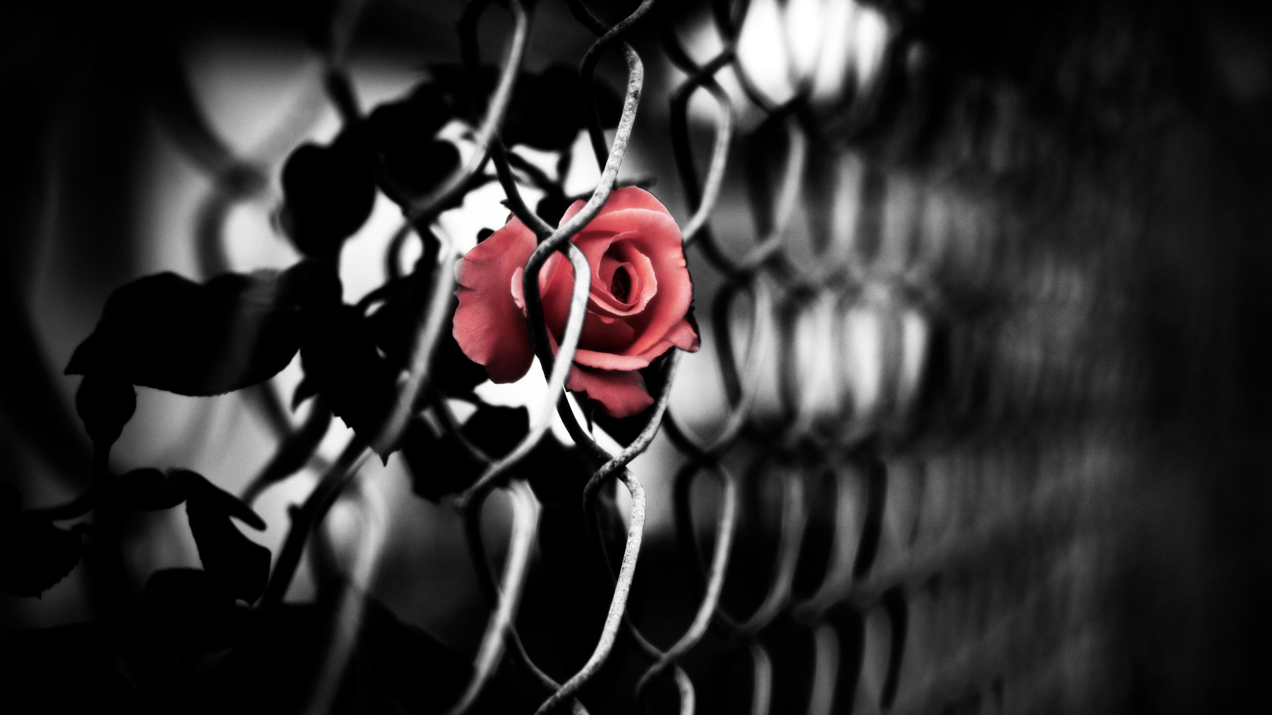 картинки бело-красно-черного цвета которой