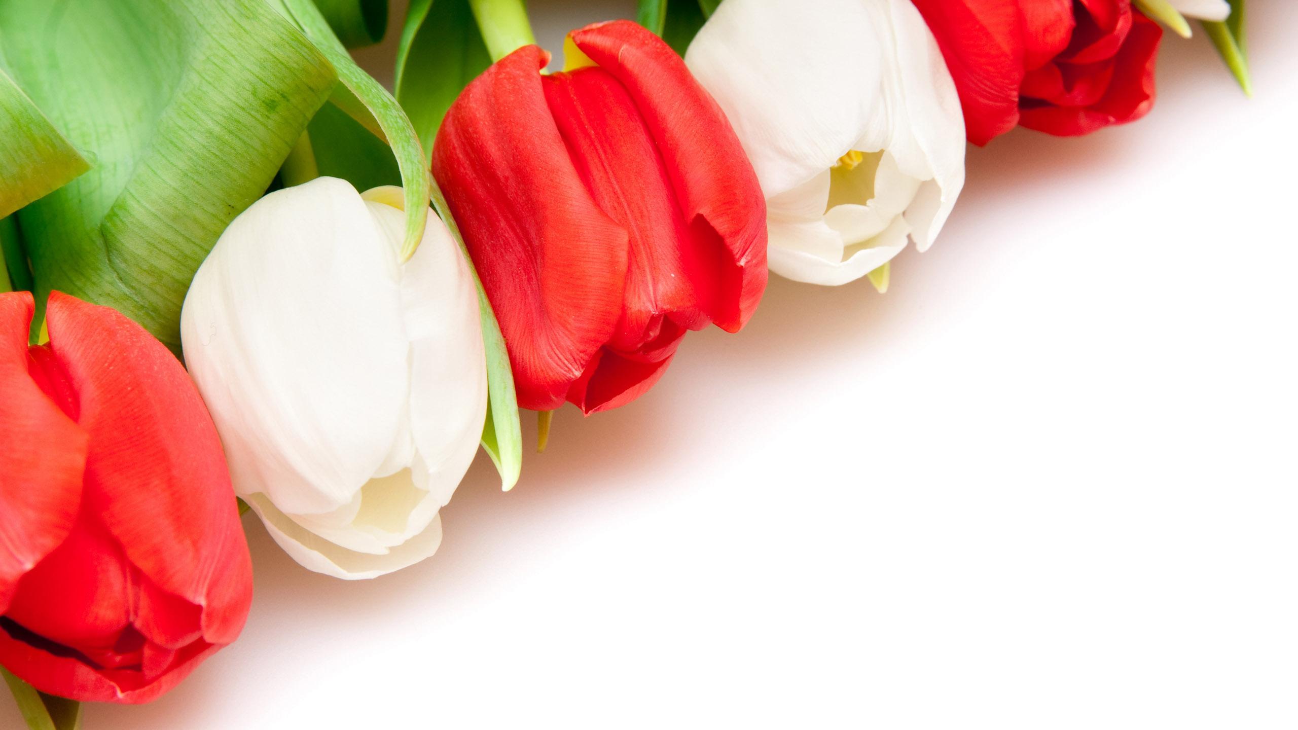 Поделки, открытки цветами тюльпаны