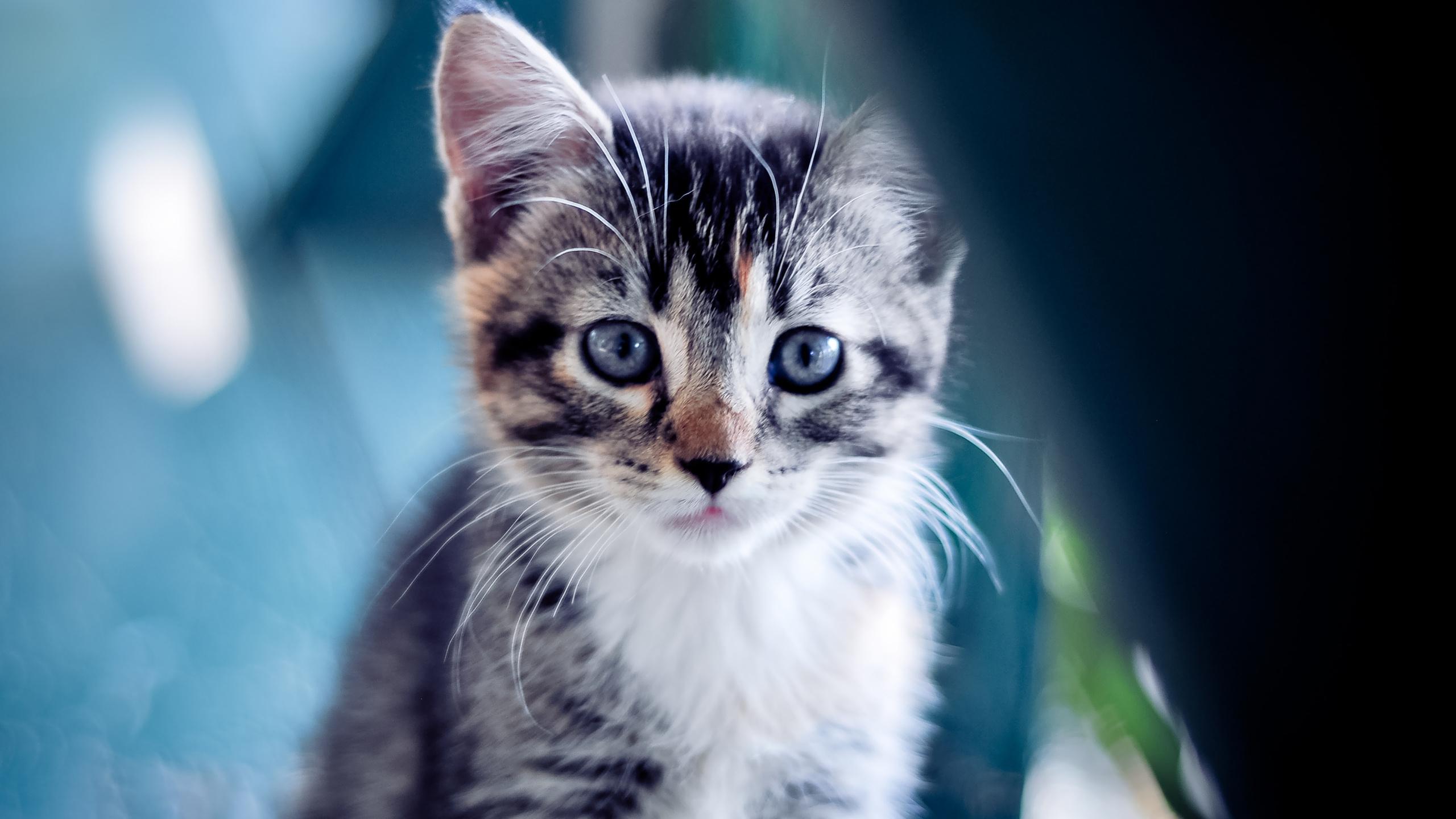Картинки для телефона кошек