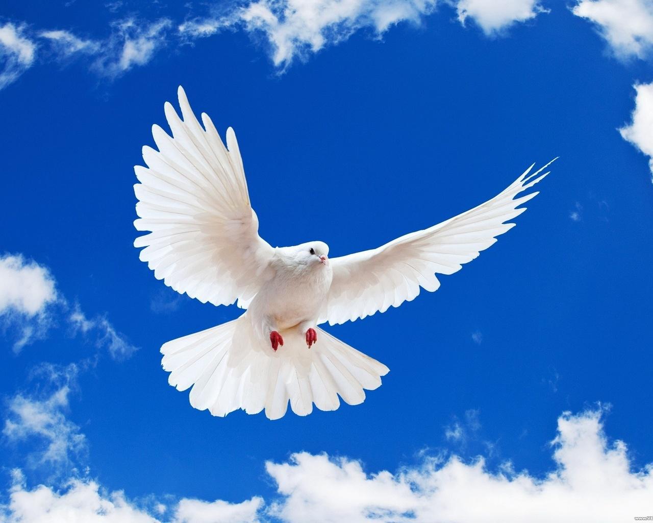 Картинки о мире с голубем мира