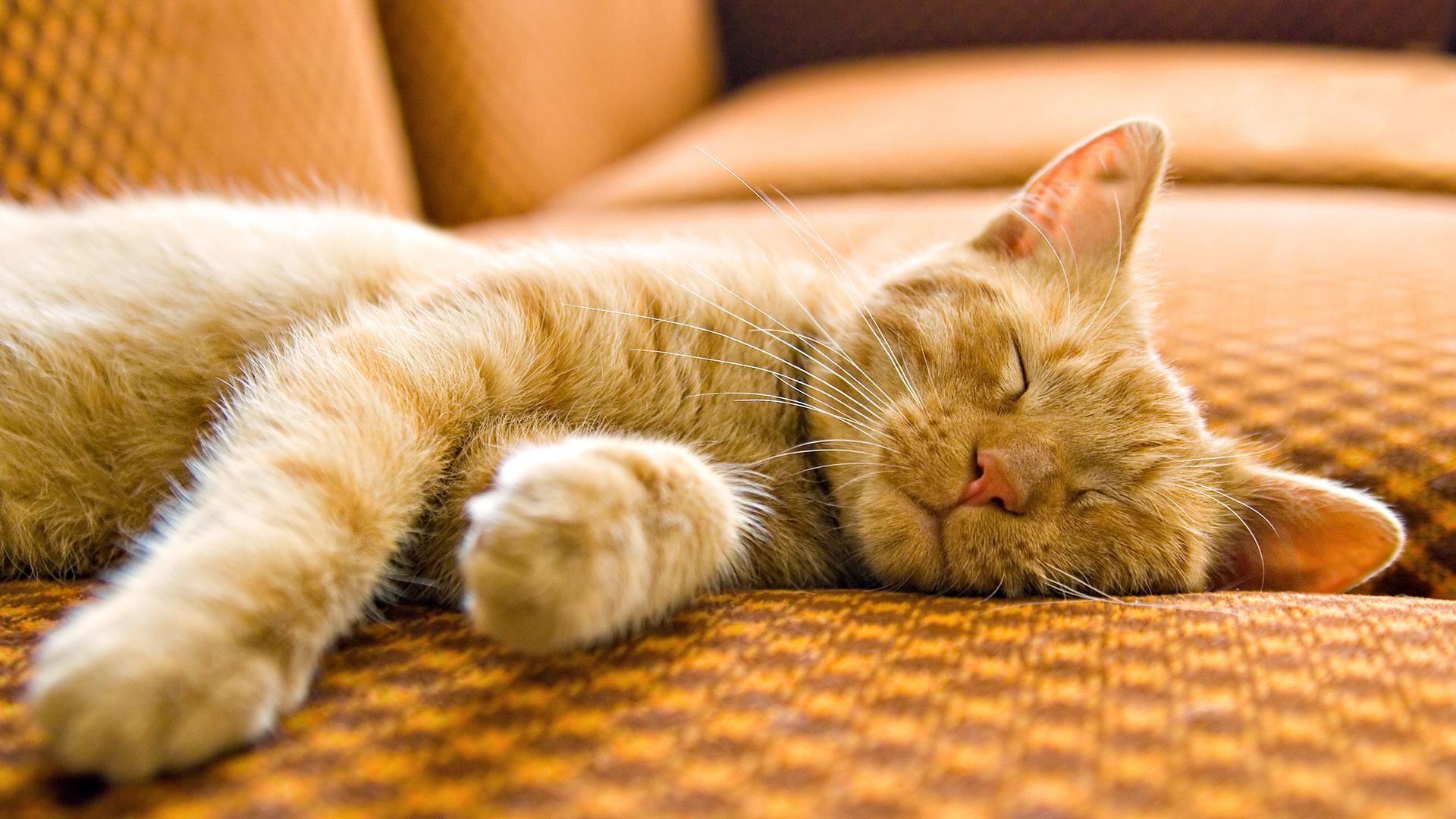 Картинки спящей кошки