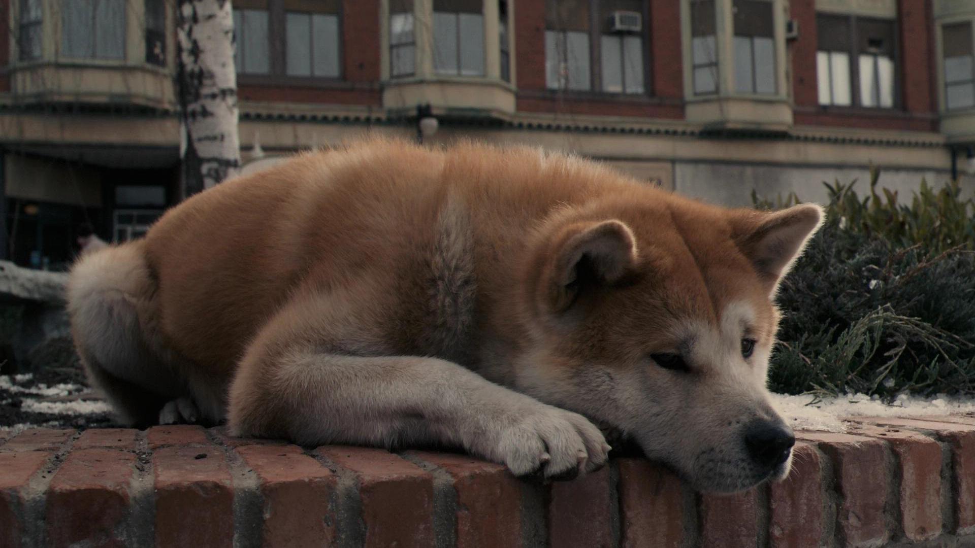 самые верные собаки картинки изображении отобразится
