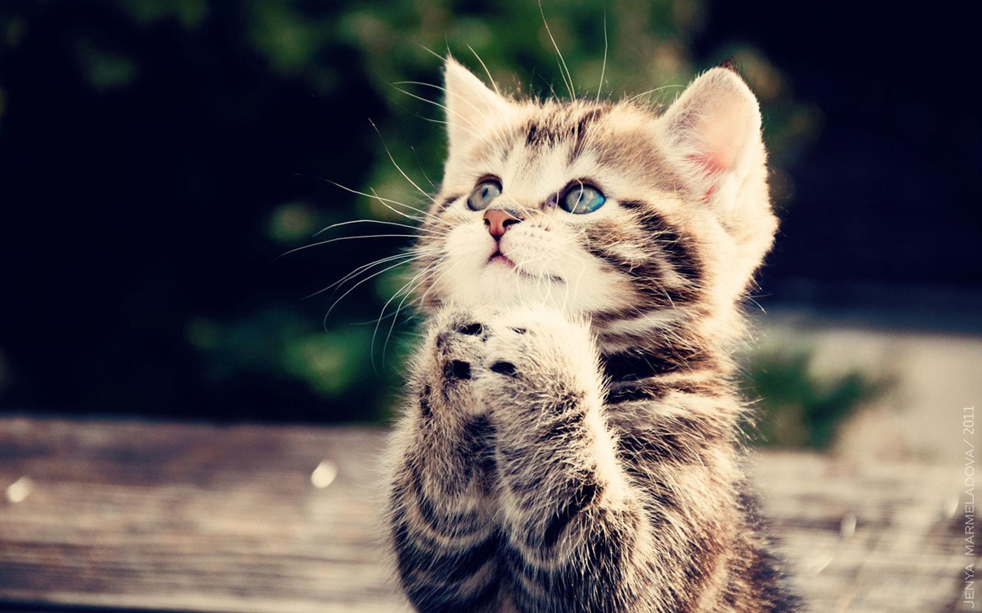 Картинка про милых котят