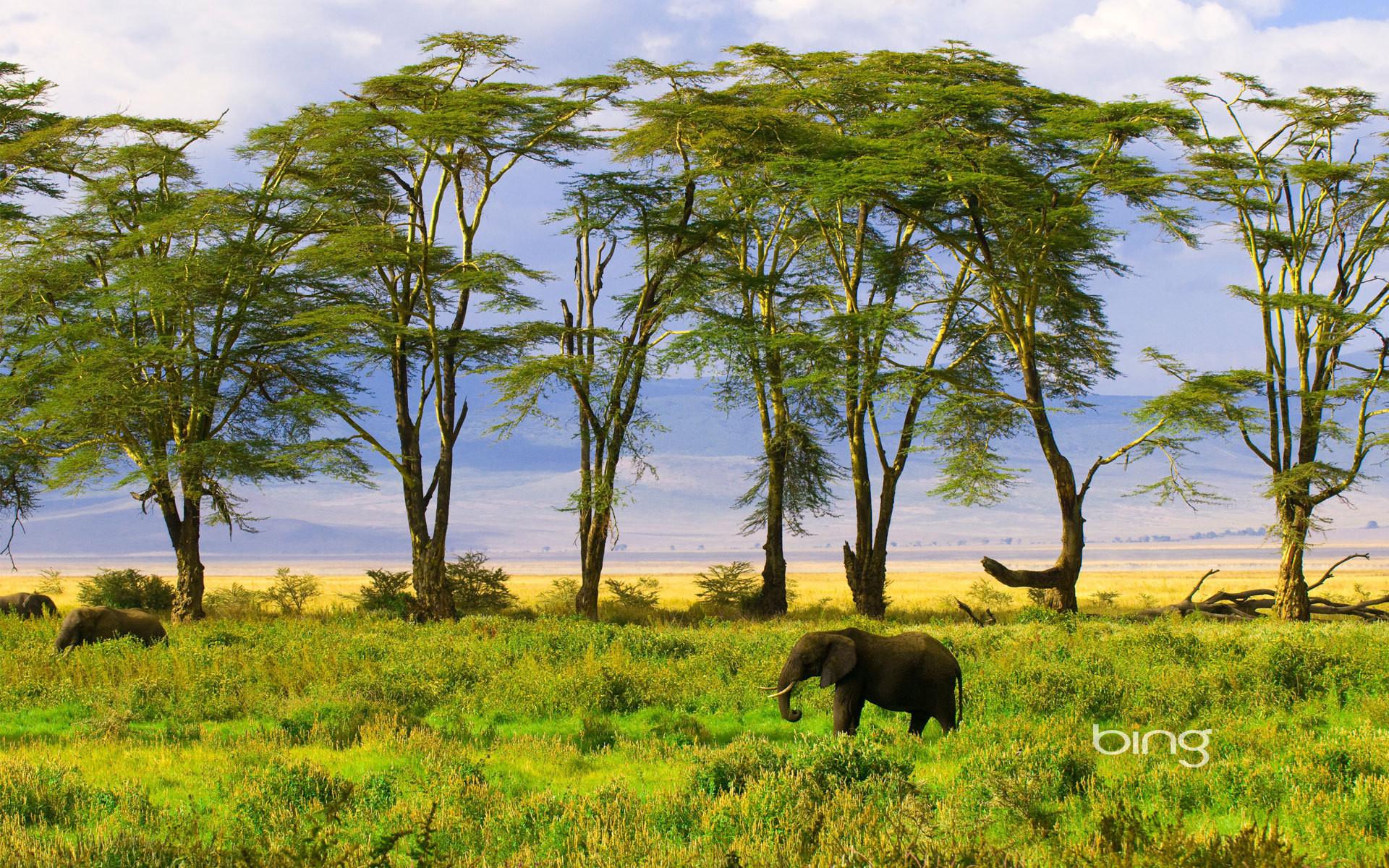 картинка природа африки без животных обоих типов накануне