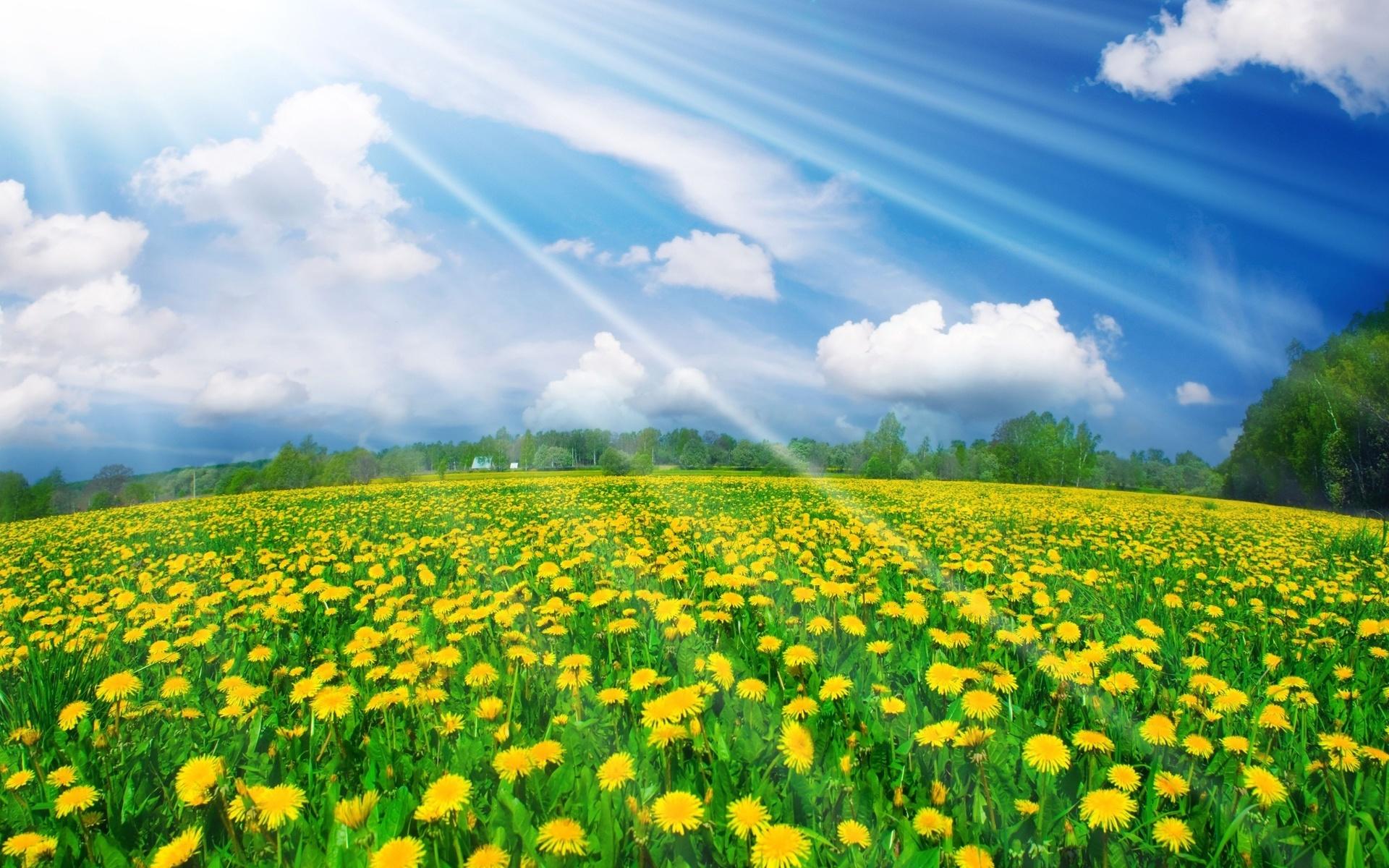 Красивые картинки яркие солнечные весна
