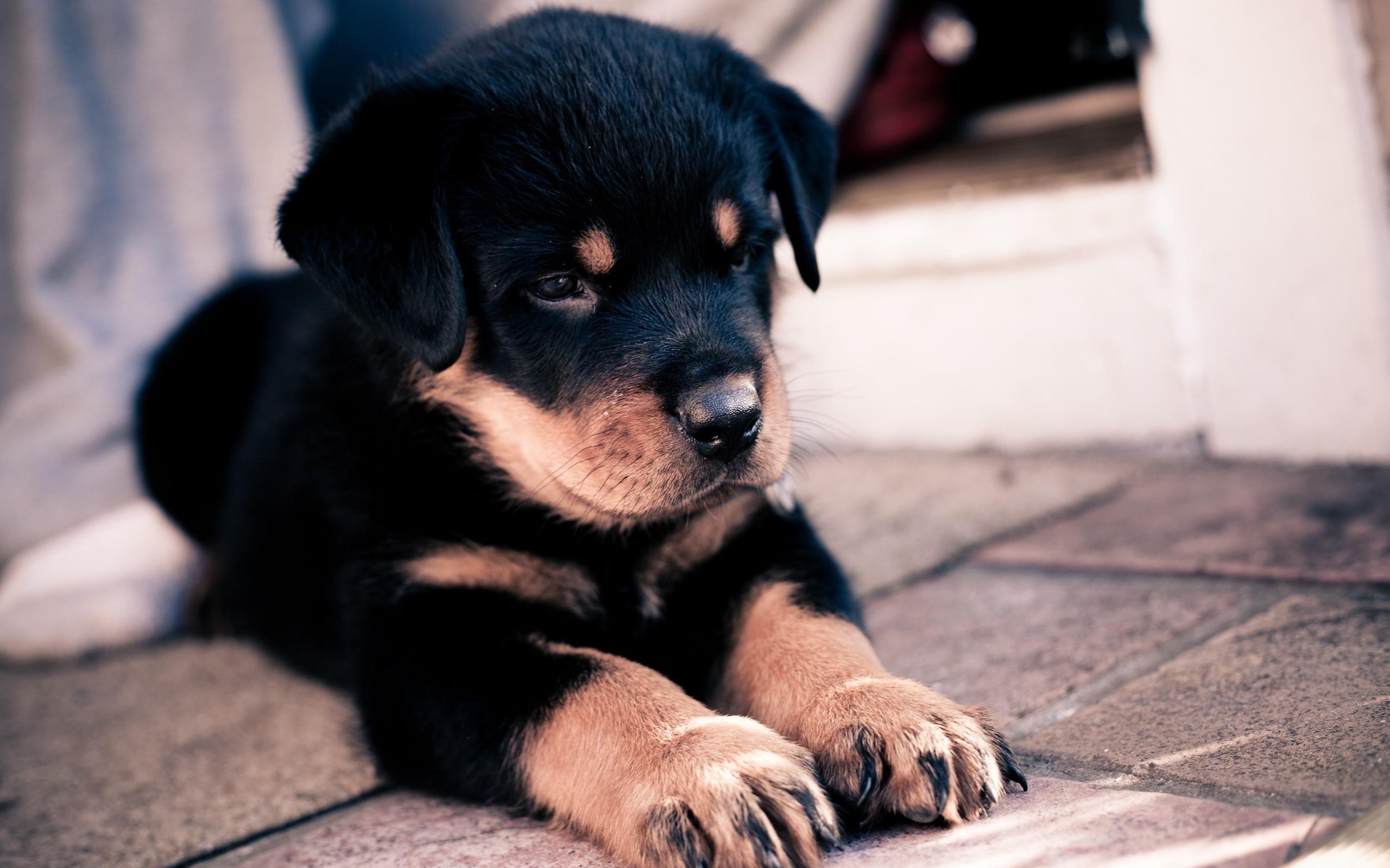 Крутые картинки про собак