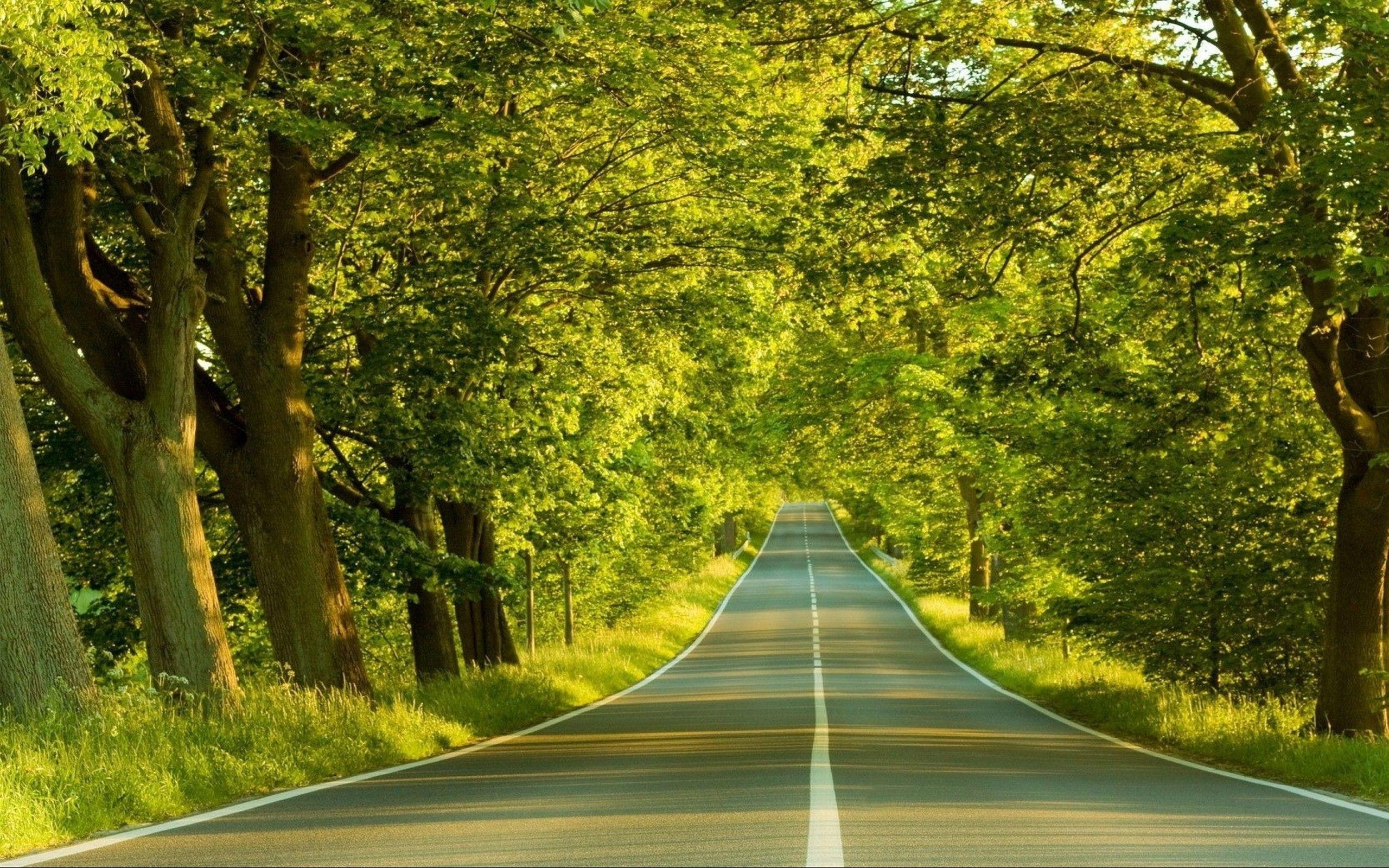 отечественная картинка с природой и дорог организациях