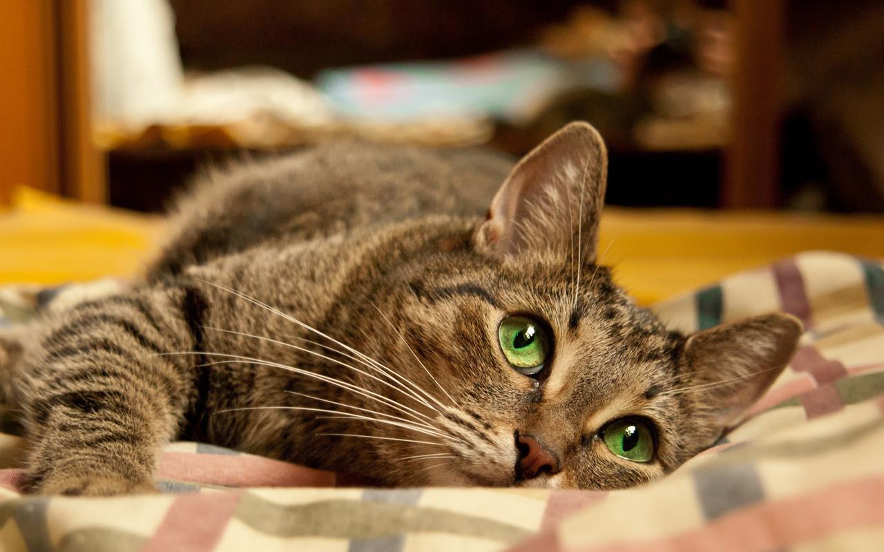Привет котя картинки