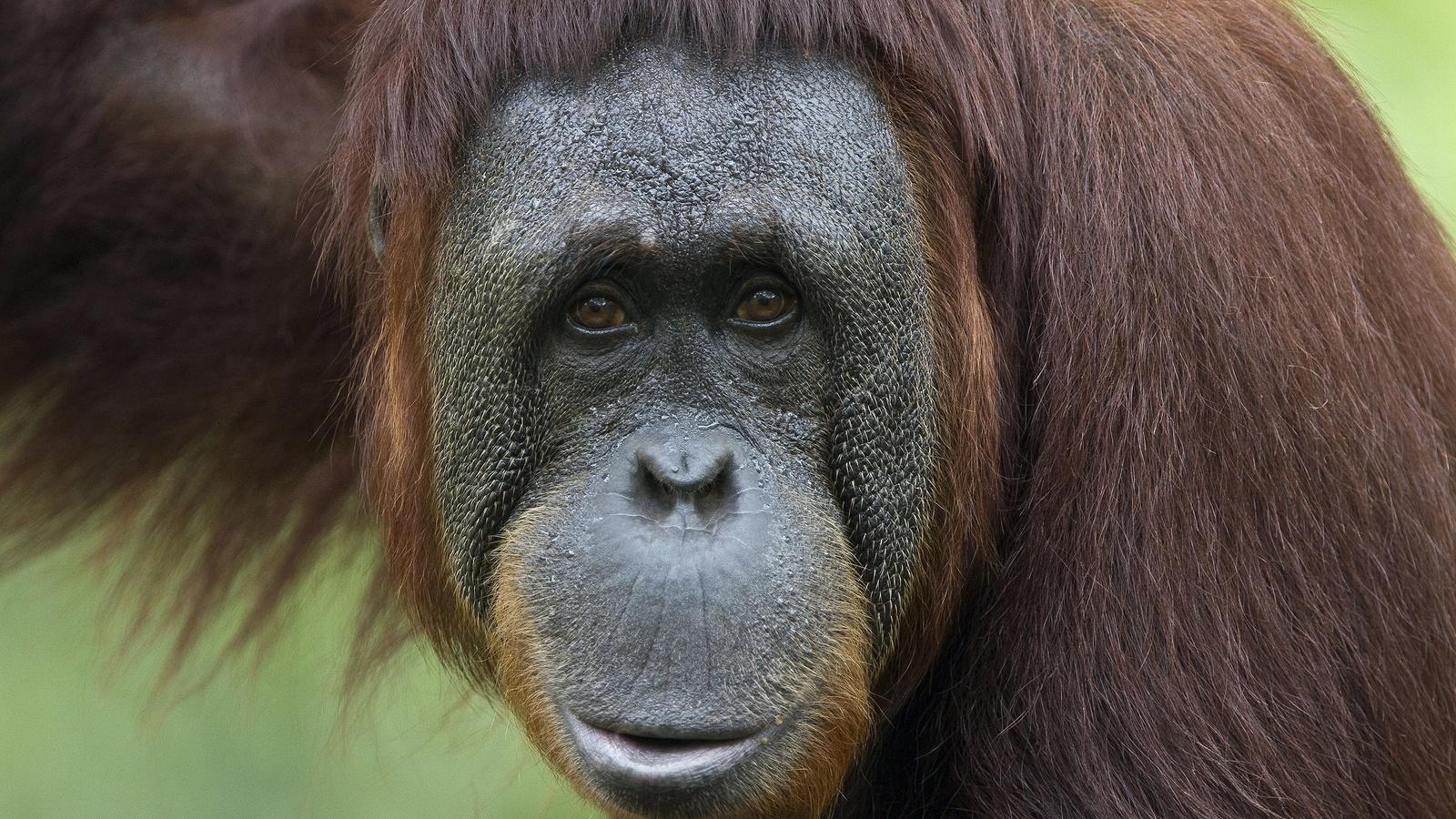 Картинки с обезьянами, днем учителя