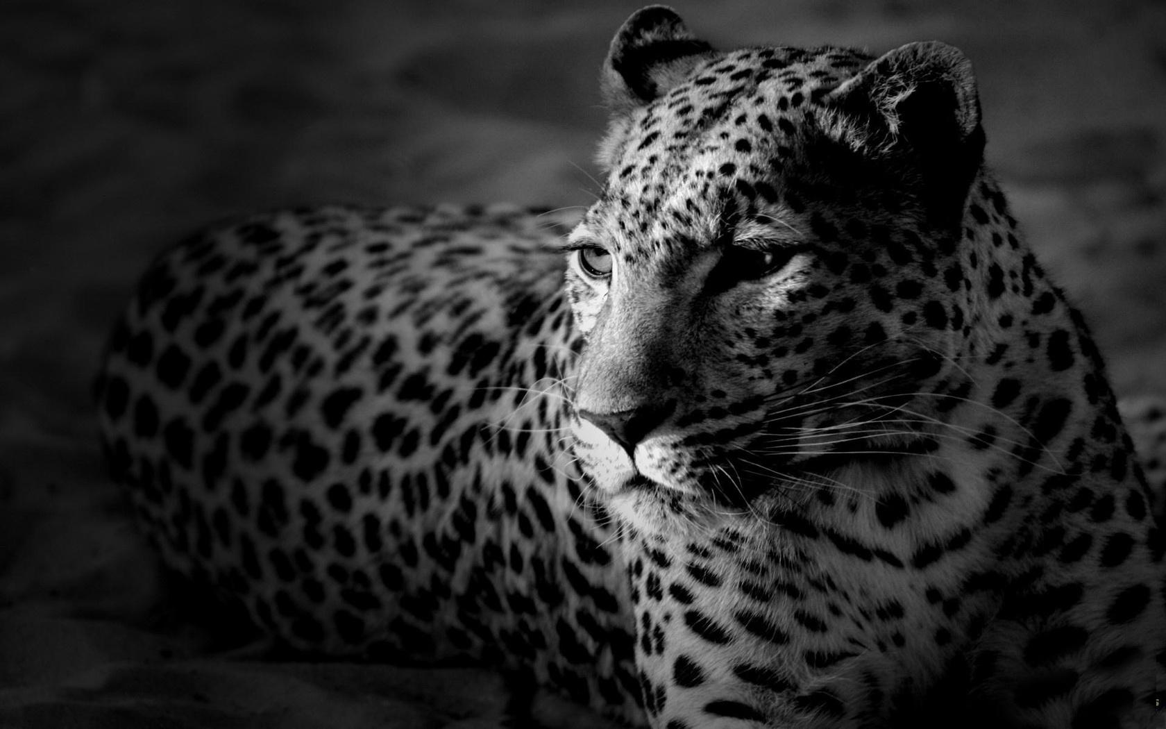 Черно белые красивые картинки