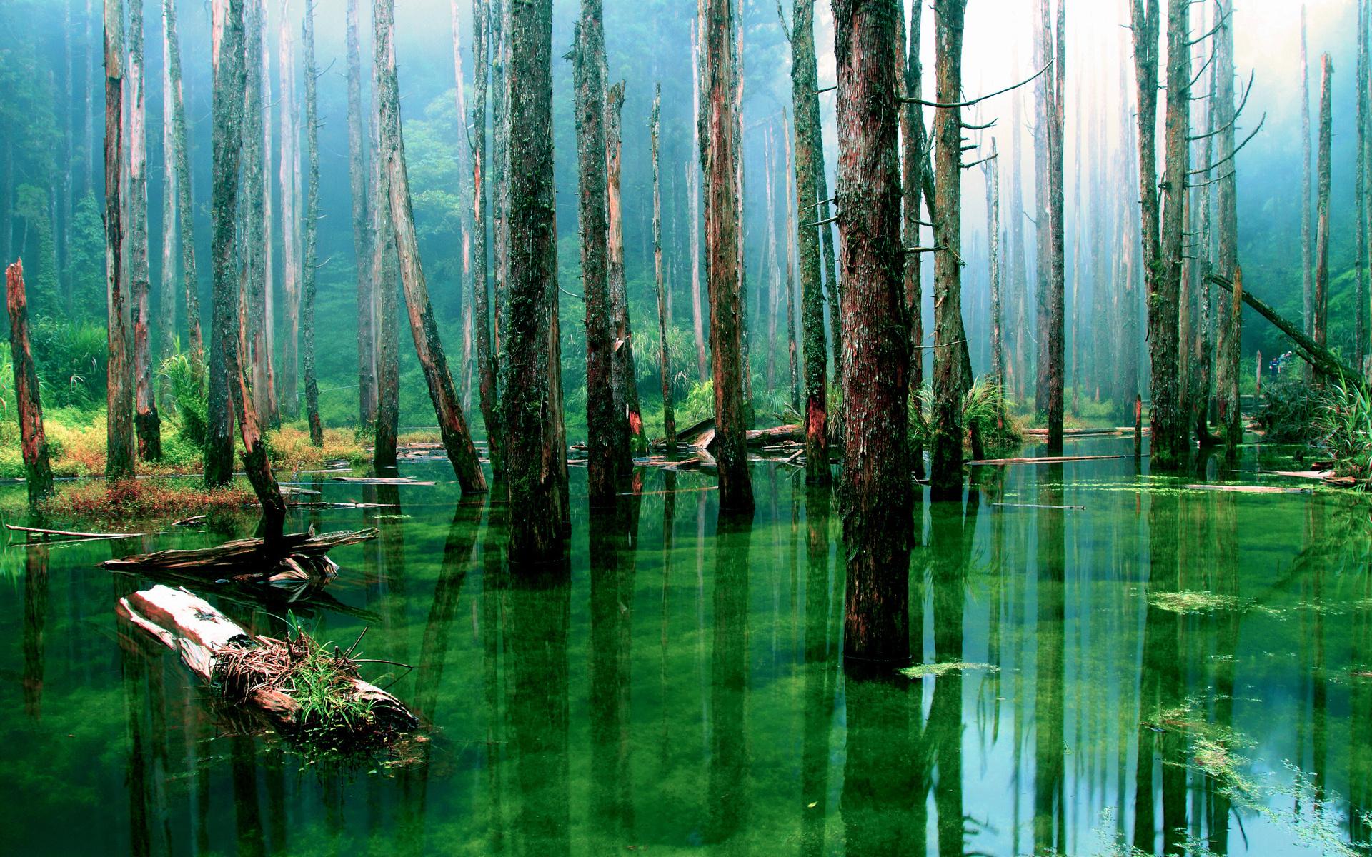 Вода и лес в картинках
