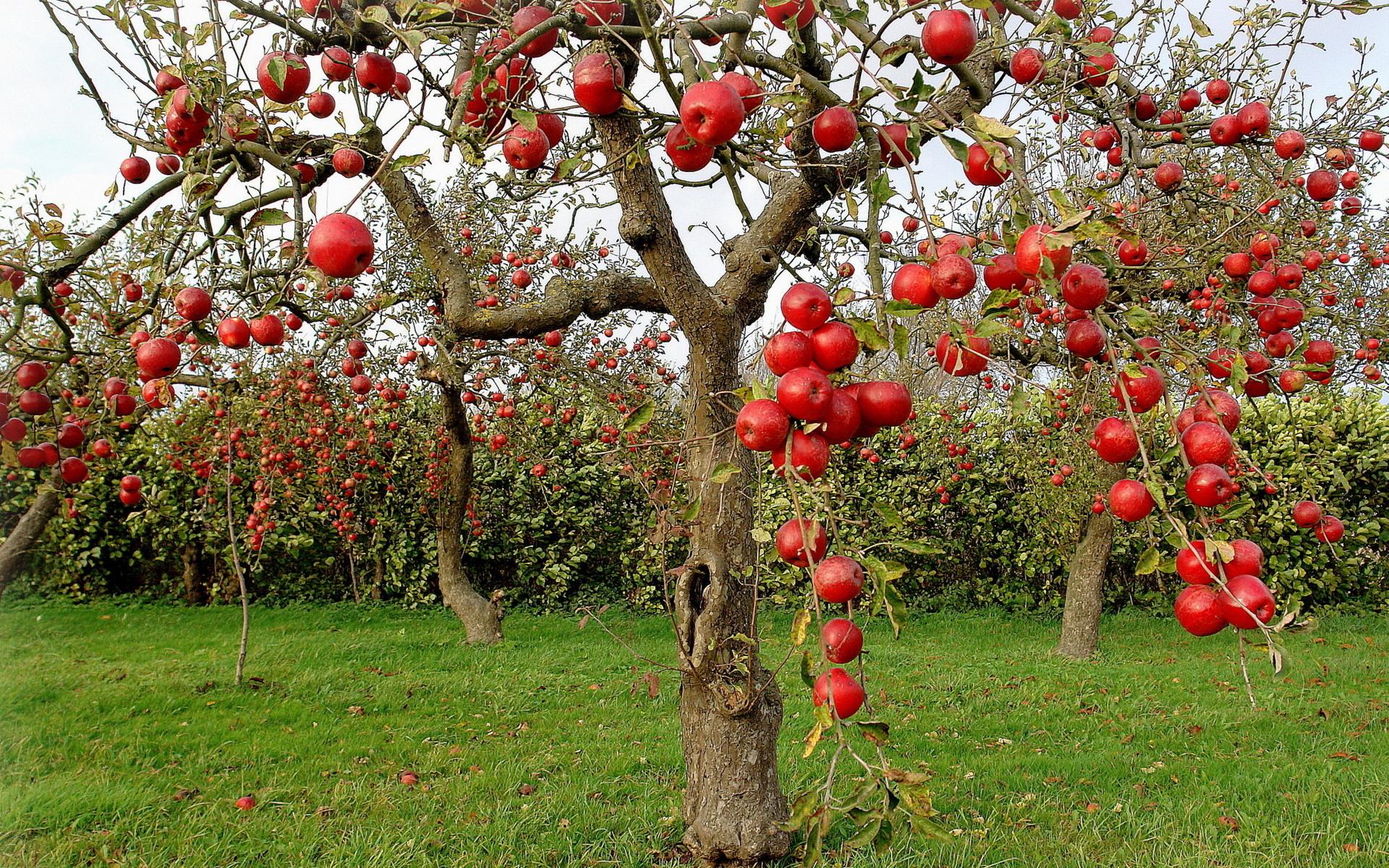 фруктовый парк картинки тут