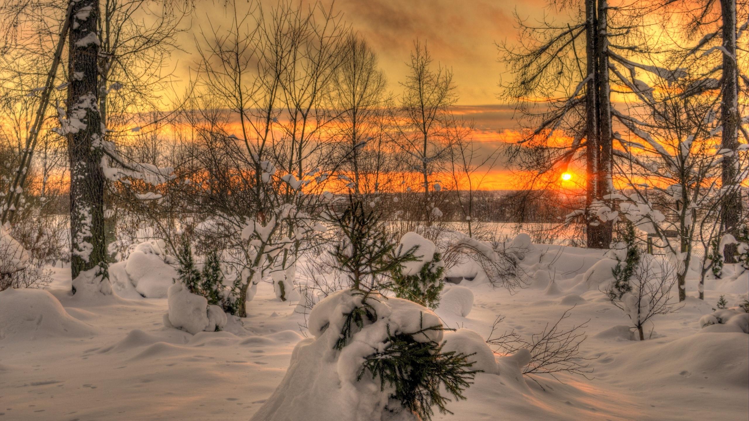Картинки на рабочий стол зимний лес солнце на весь экран изготавливаются