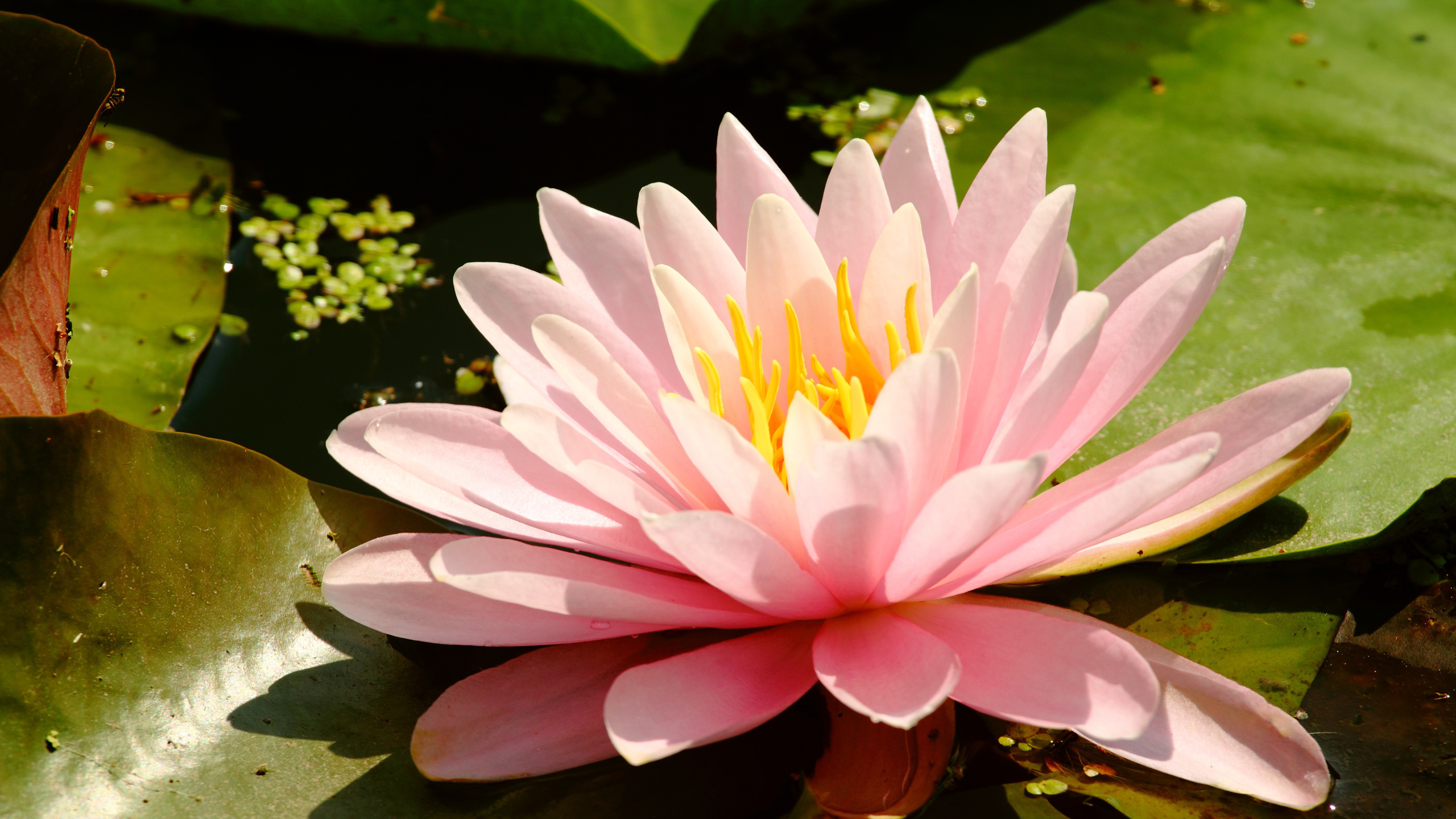 его помощью картинки в болотном цвете это место тем