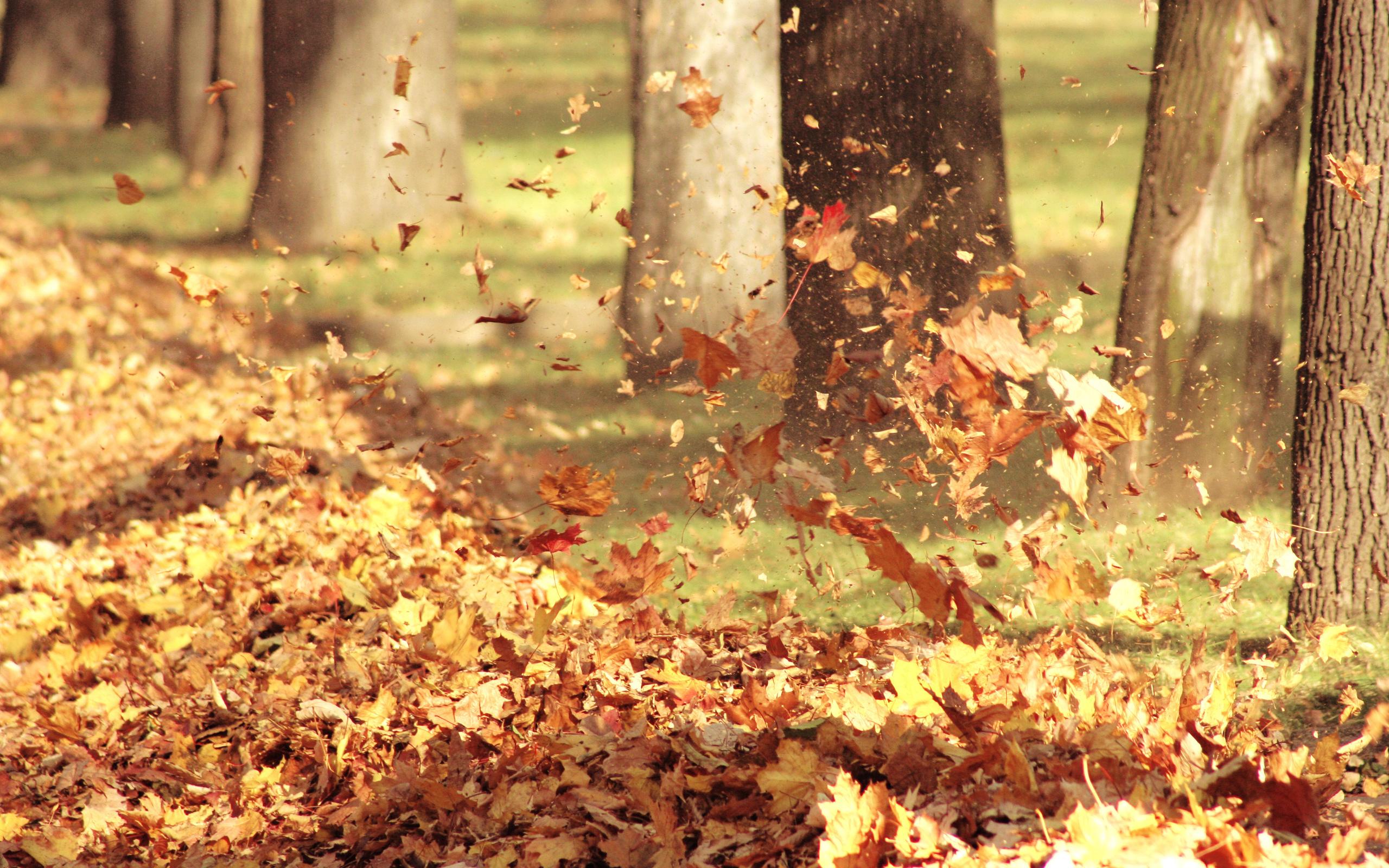 Шум листвы картинка