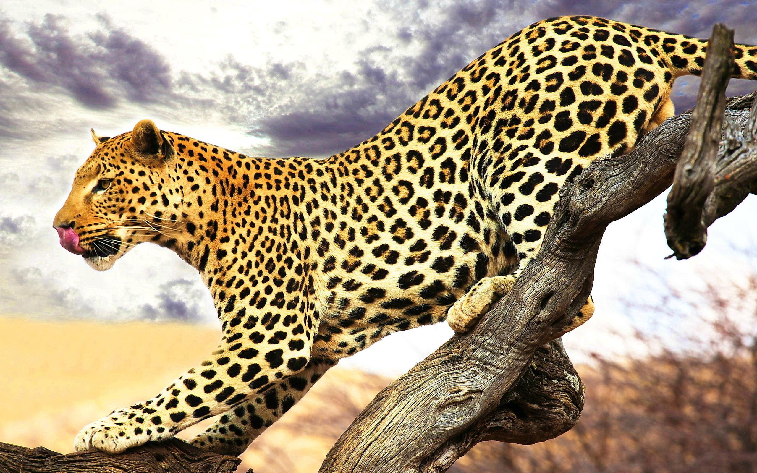 леопард картинки животного рыба