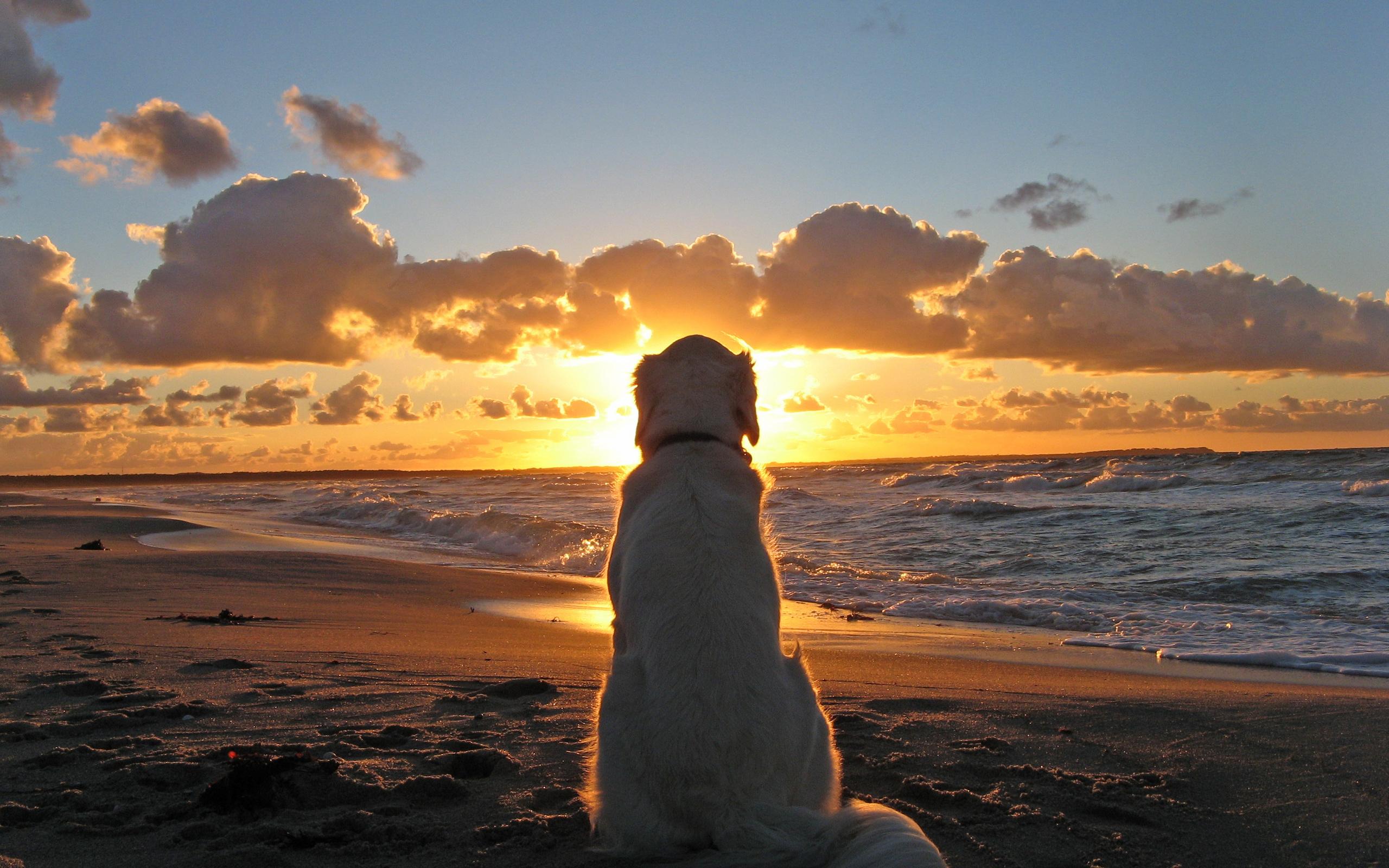 булочки картинка ждет на берегу моря этом деле