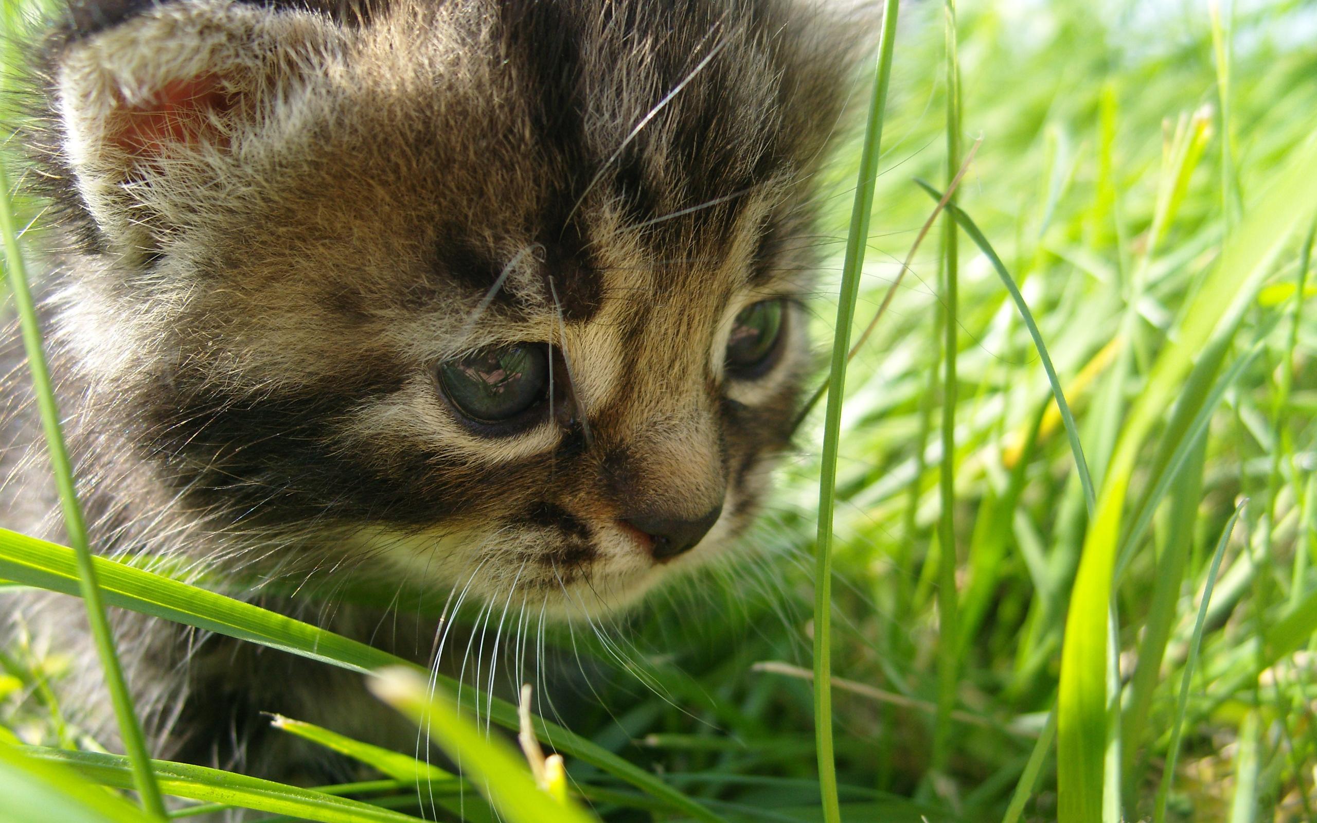 Классные картинки котят