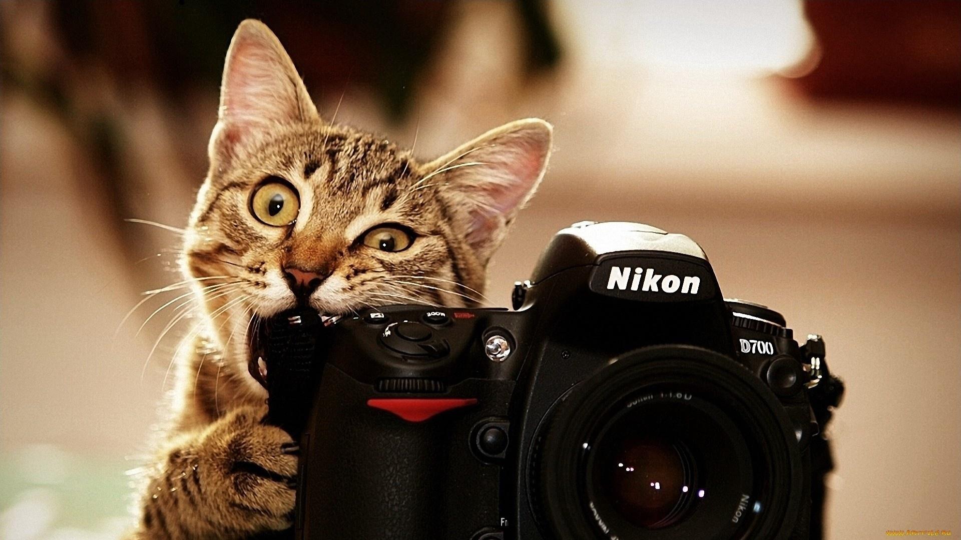 картинки красивые прикольные на телефон интересные картинке изображены