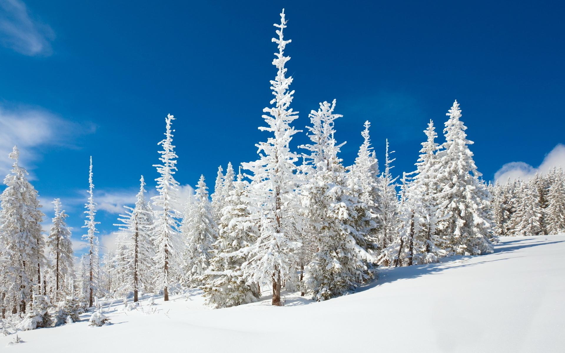 обои в зимнем лесу картинки