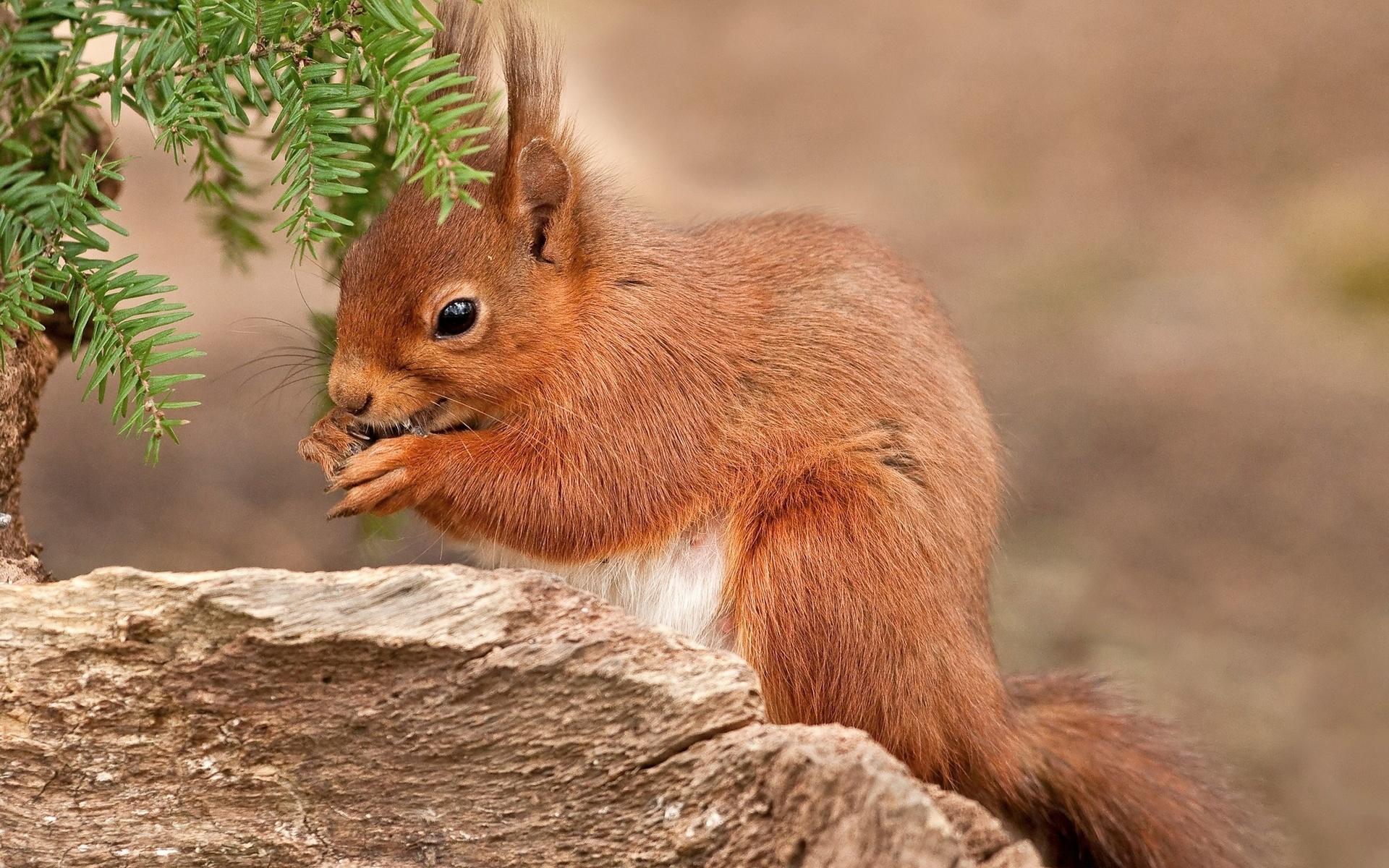 маленькие картинки лесных зверей замечена режиссёрами телекомпании