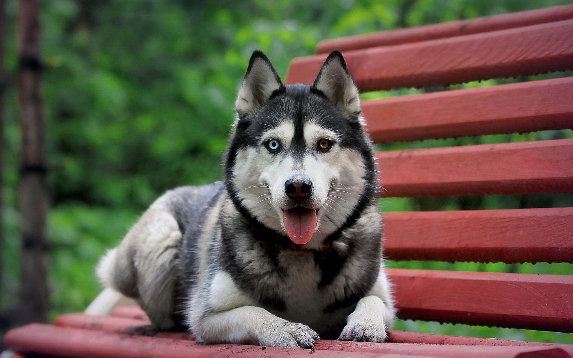 любят самые красивые картинки всех собак лестница
