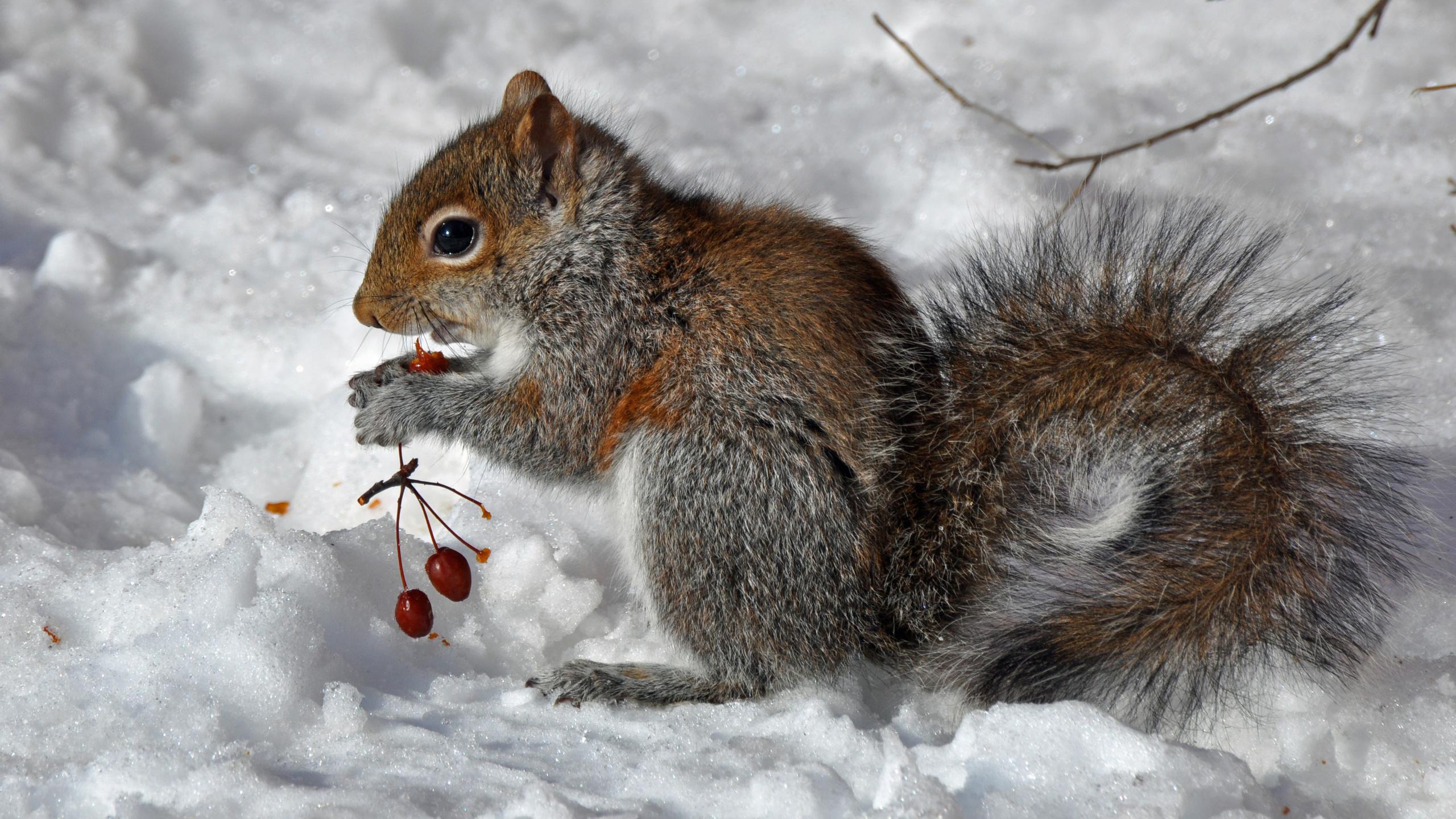 обязательном картинки зима природа животные при
