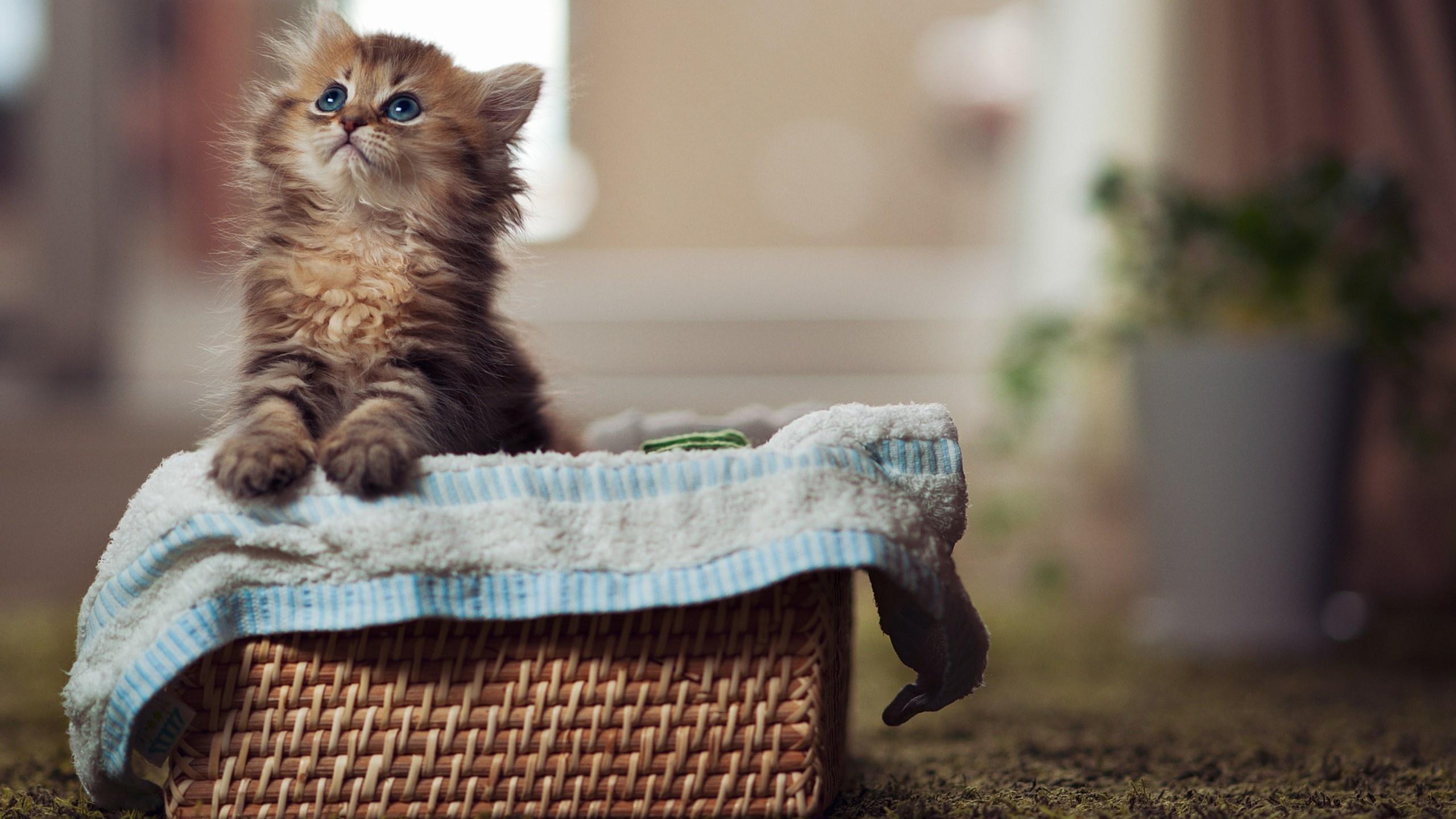 Самые милые картинки котят