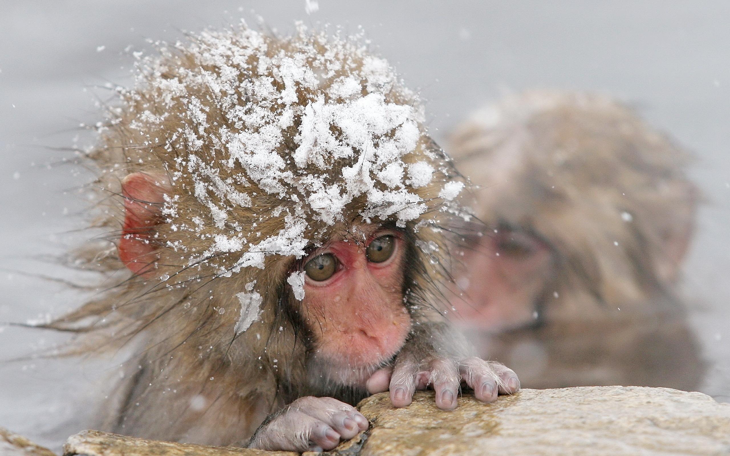 Картинка про снег прикольные