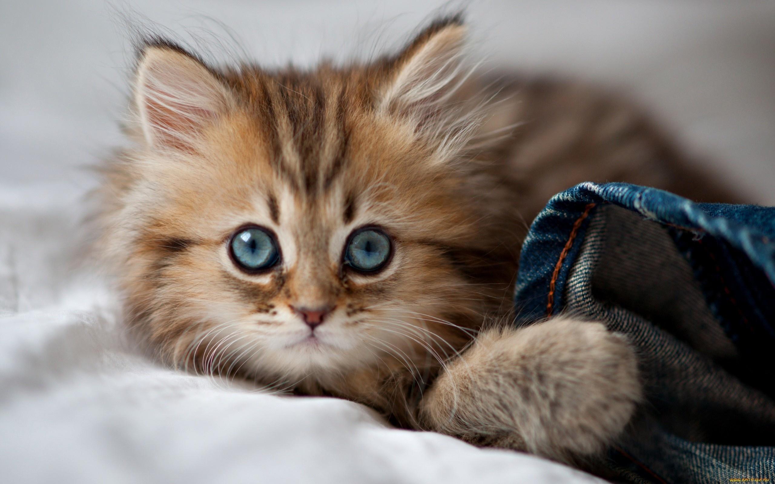 Дню бухгалтера, картинка котят смешных