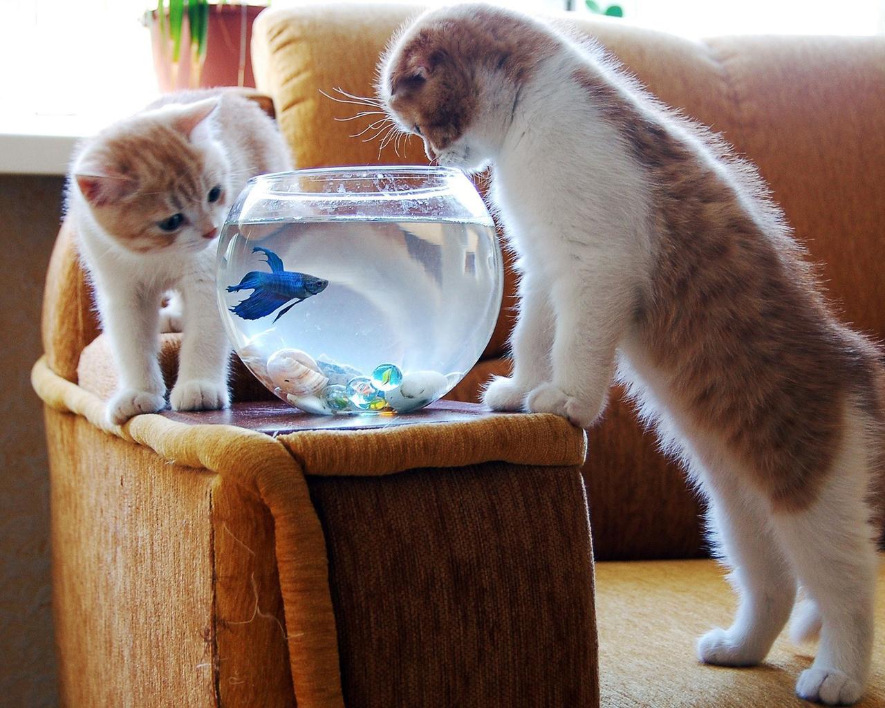 Смешные картинки про кота и котенка, агатовой свадьбе открытка