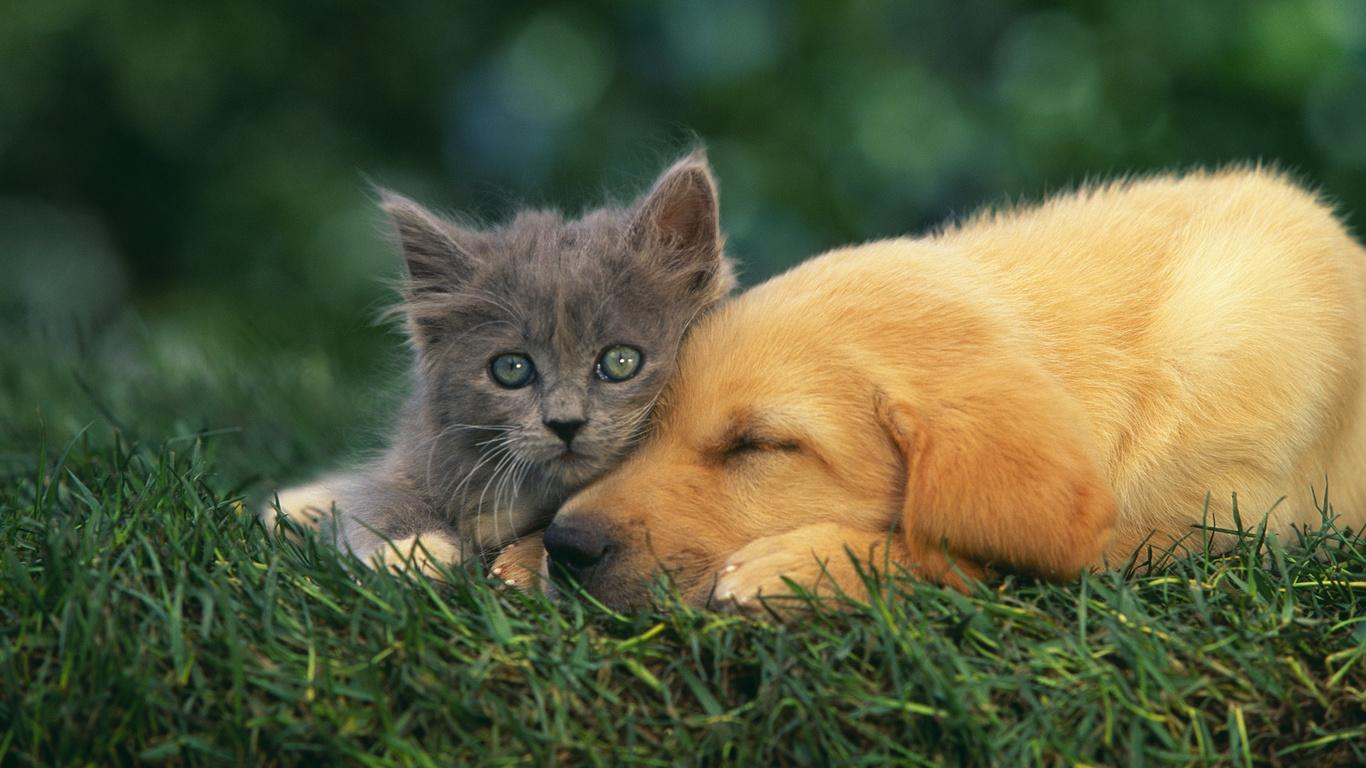 картинки на планшет собаки и кошки этом