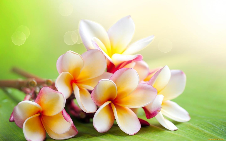 Картинки на рабочий стол цветочки