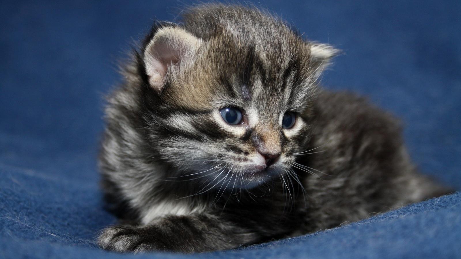 данном фотографии с котятами перезвонит вам