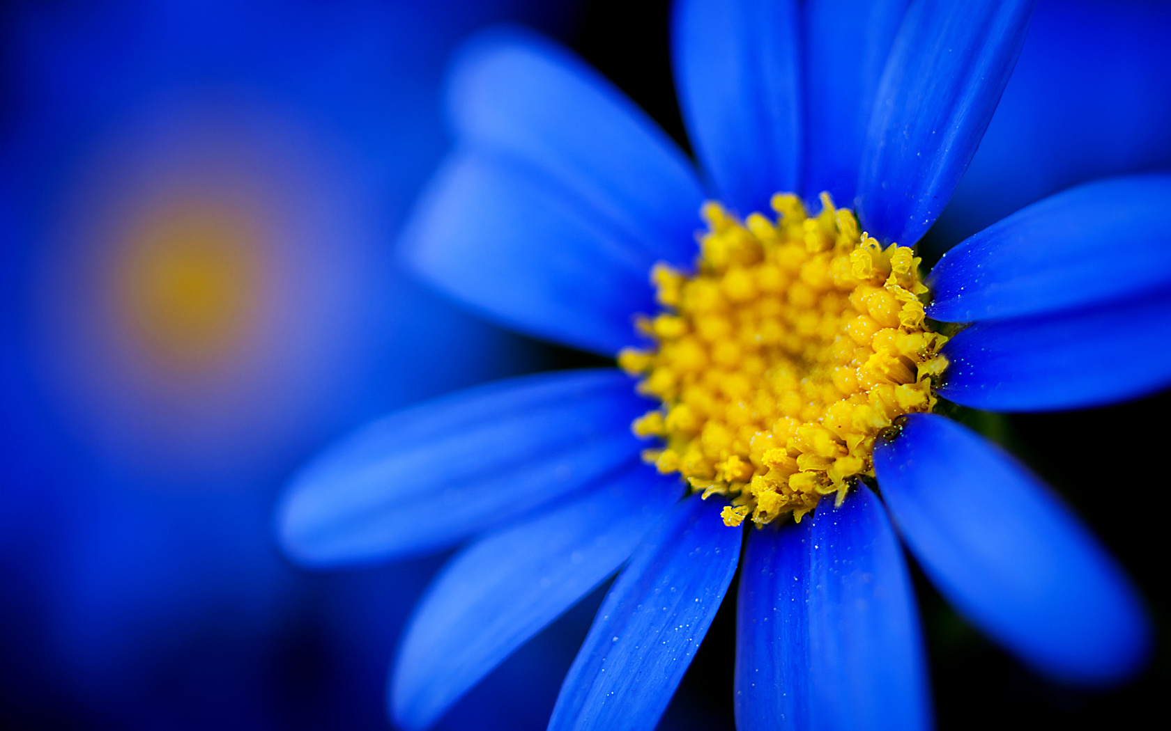 невестой утвердили красивые картинки на синем фоне фото эта статья