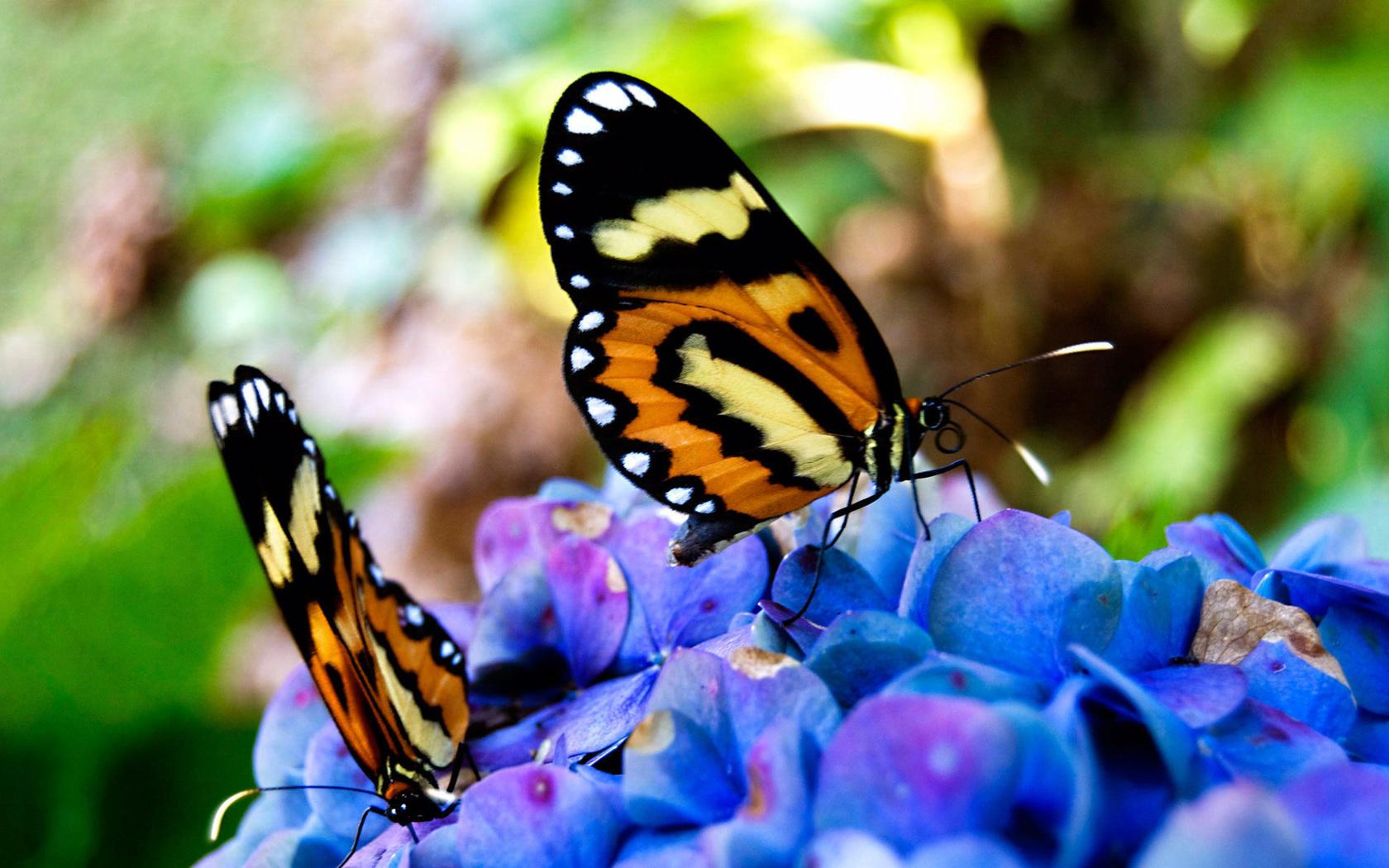 Картинки на рабочий стол природа и бабочки