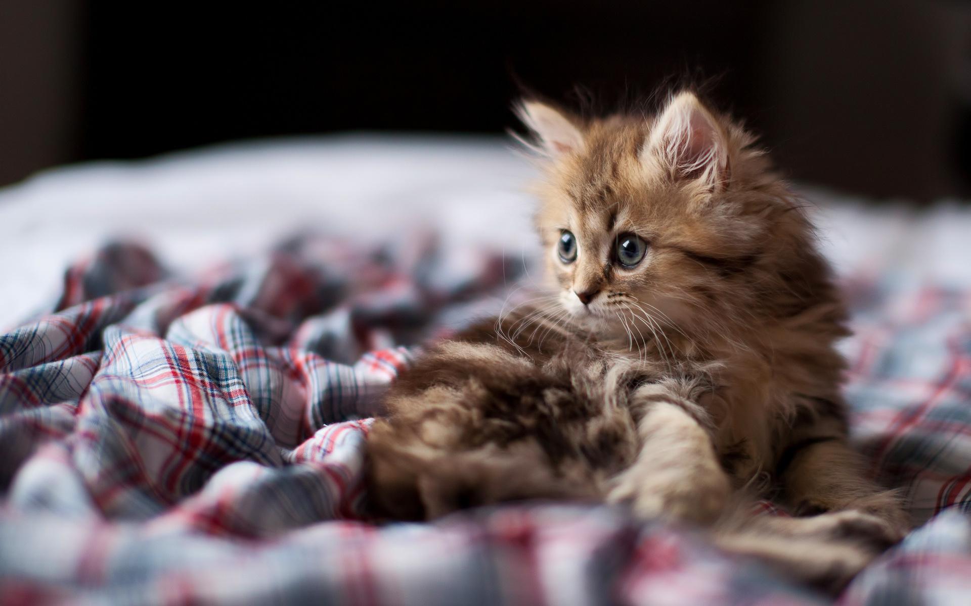 Самый милый котенок картинка