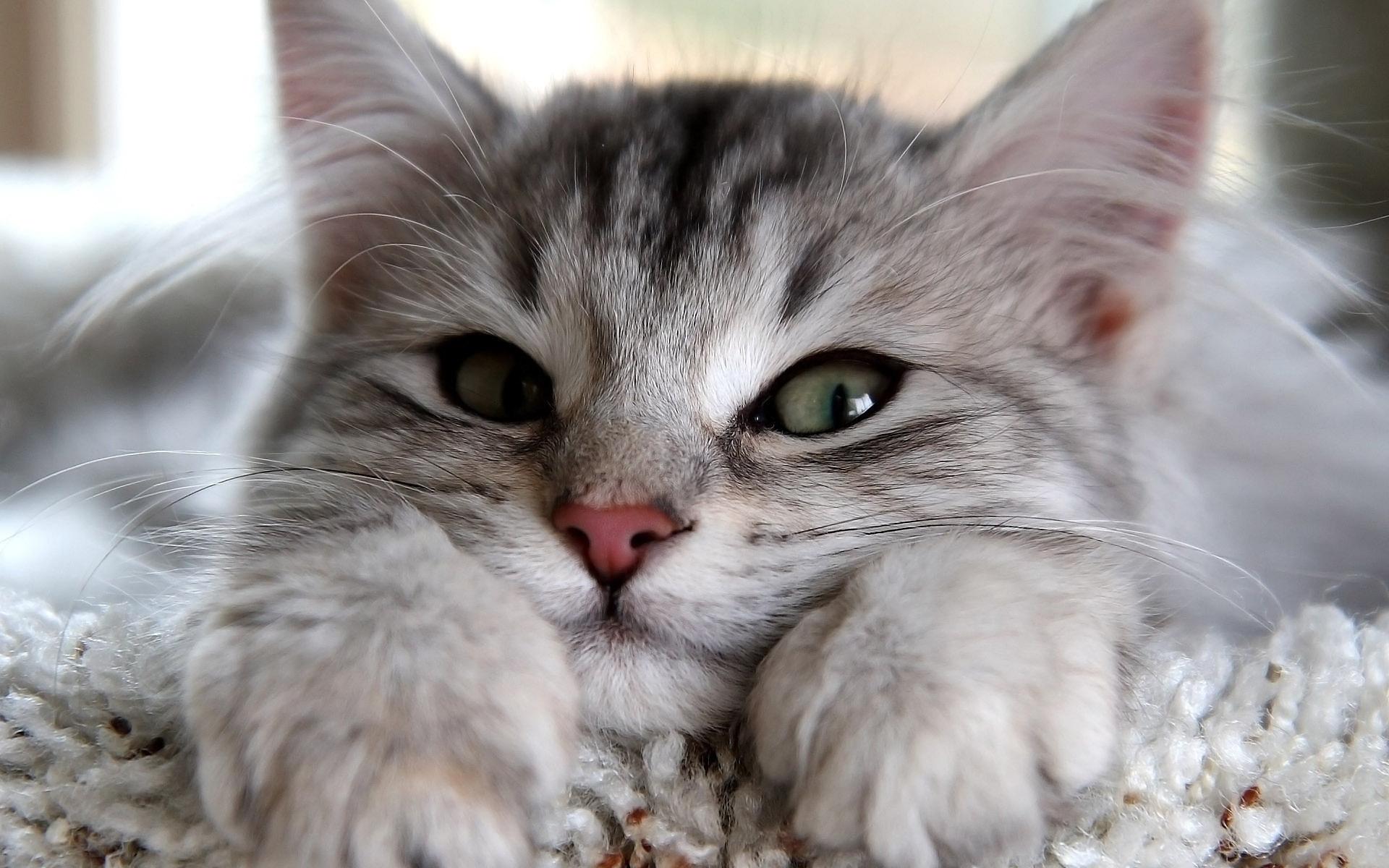 Открытка самая красивая кошка
