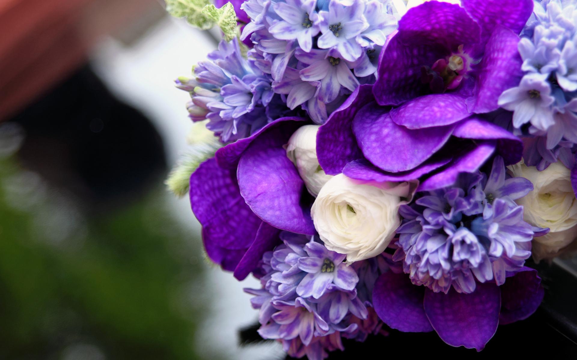Белые фиолетовые картинки