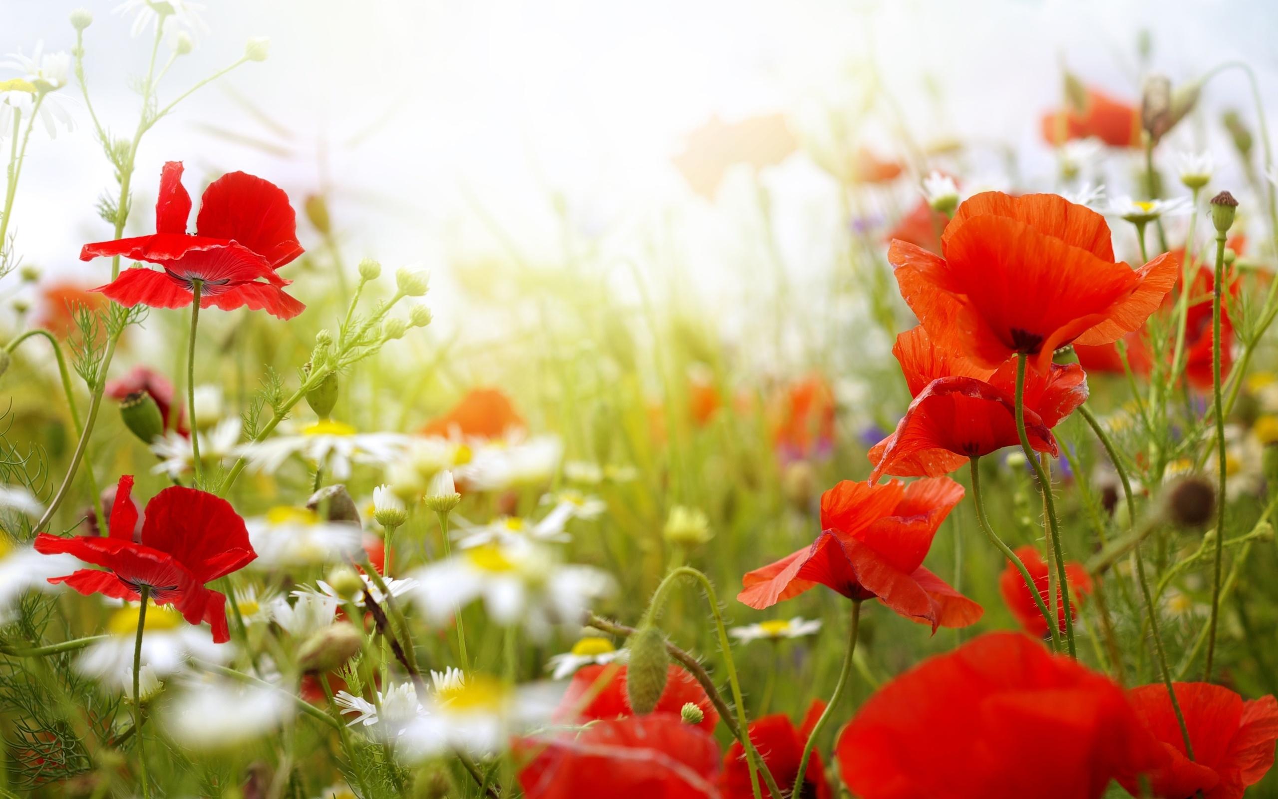Цветы летом картинки высокого качества