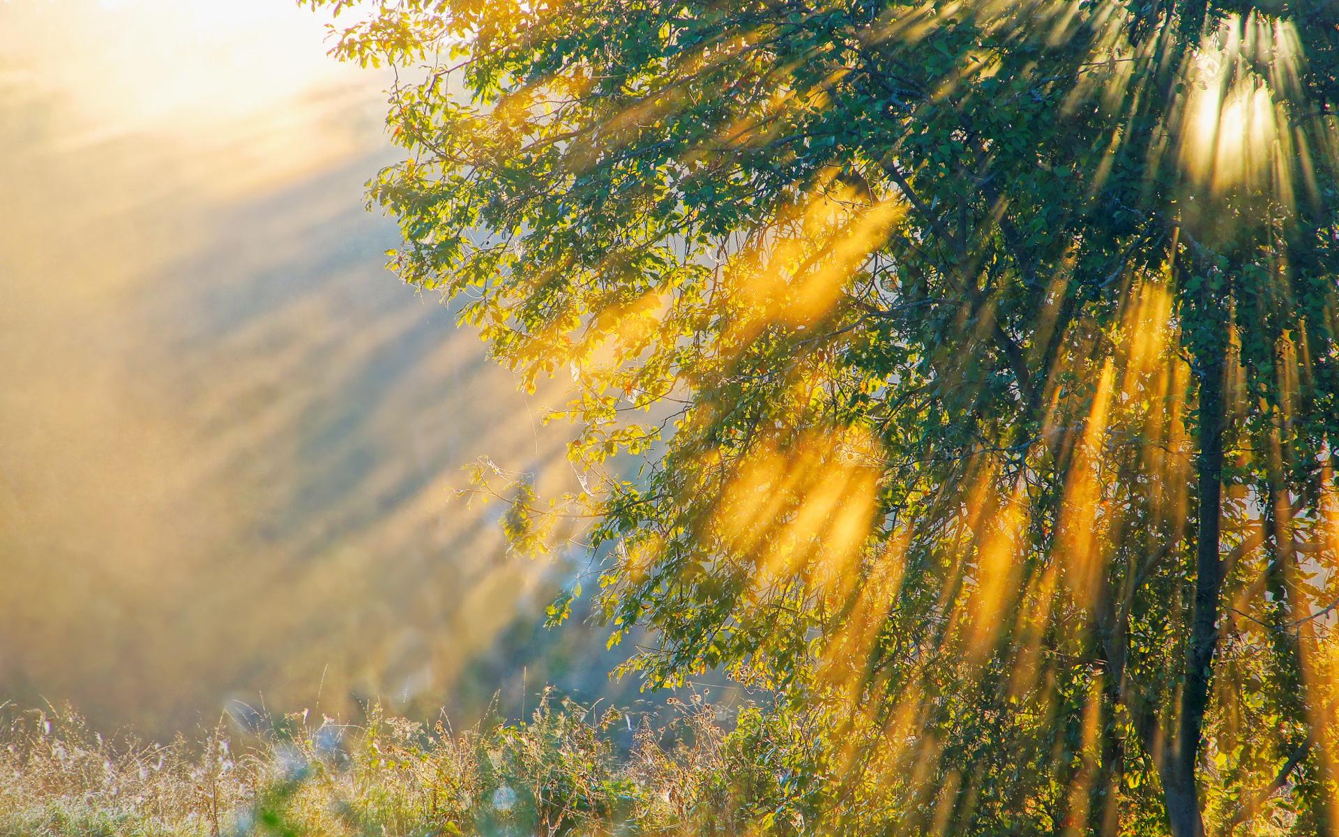 Лучи солнца открытка