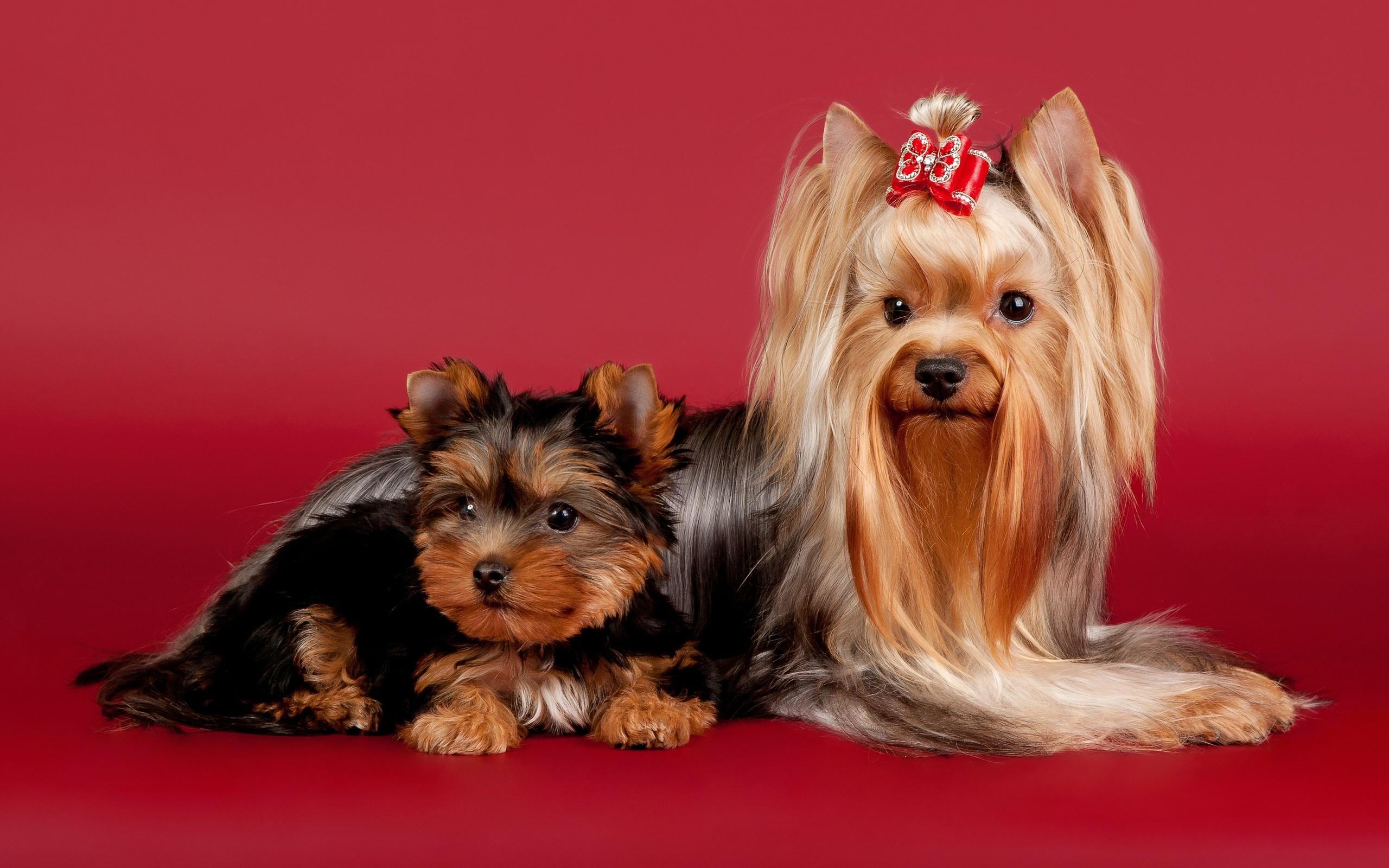 Картинки пород собак басенджи которой вам