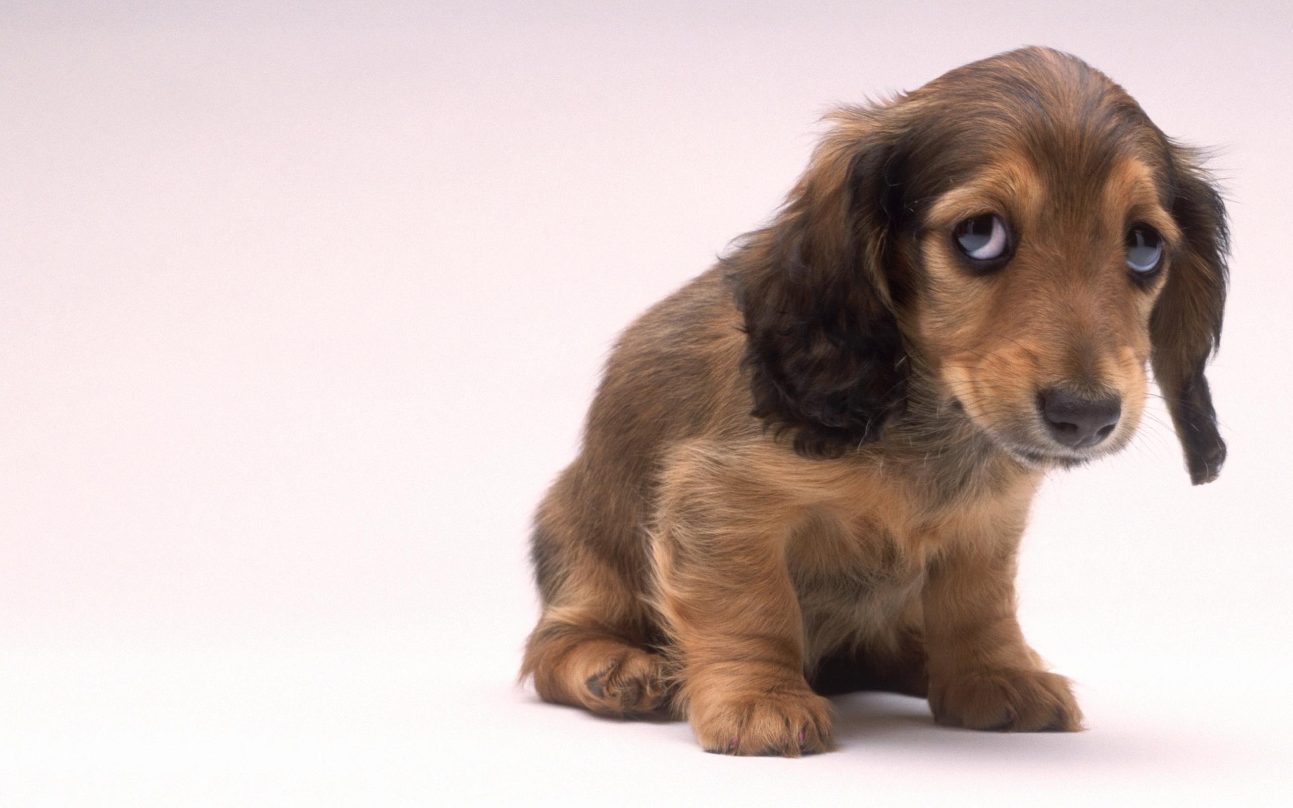 щенок просит прощения картинки объявление услугах