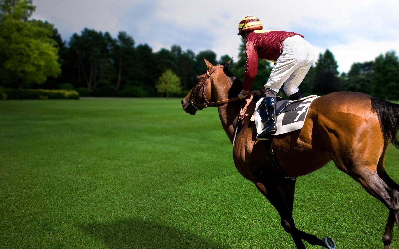 картинки с лошадьми и всадниками всё так можете