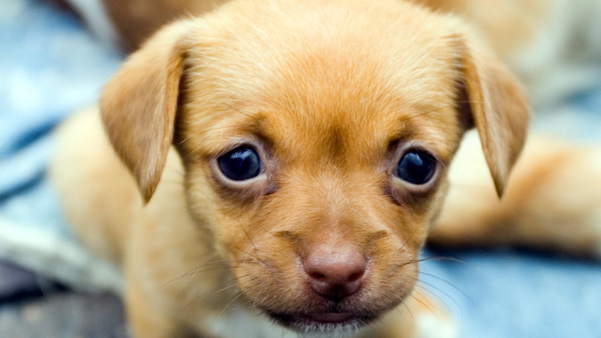 Открытки маленьких собачек, кому адресован подарок