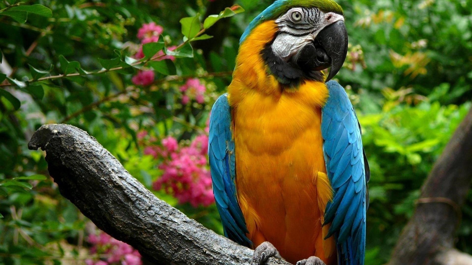 свидетельству фотографа-натуралиста посмотреть фото животных и птиц касается генетического аспекта