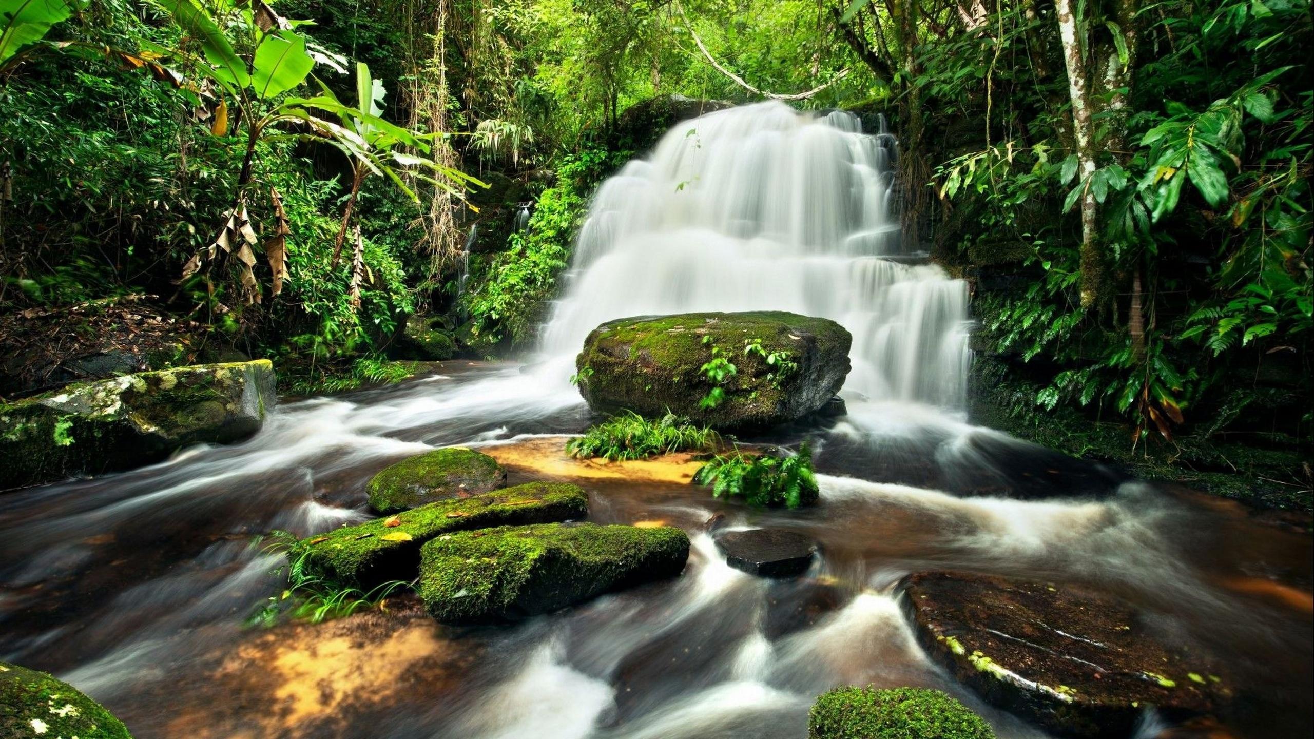 фотообои джунгли картинки