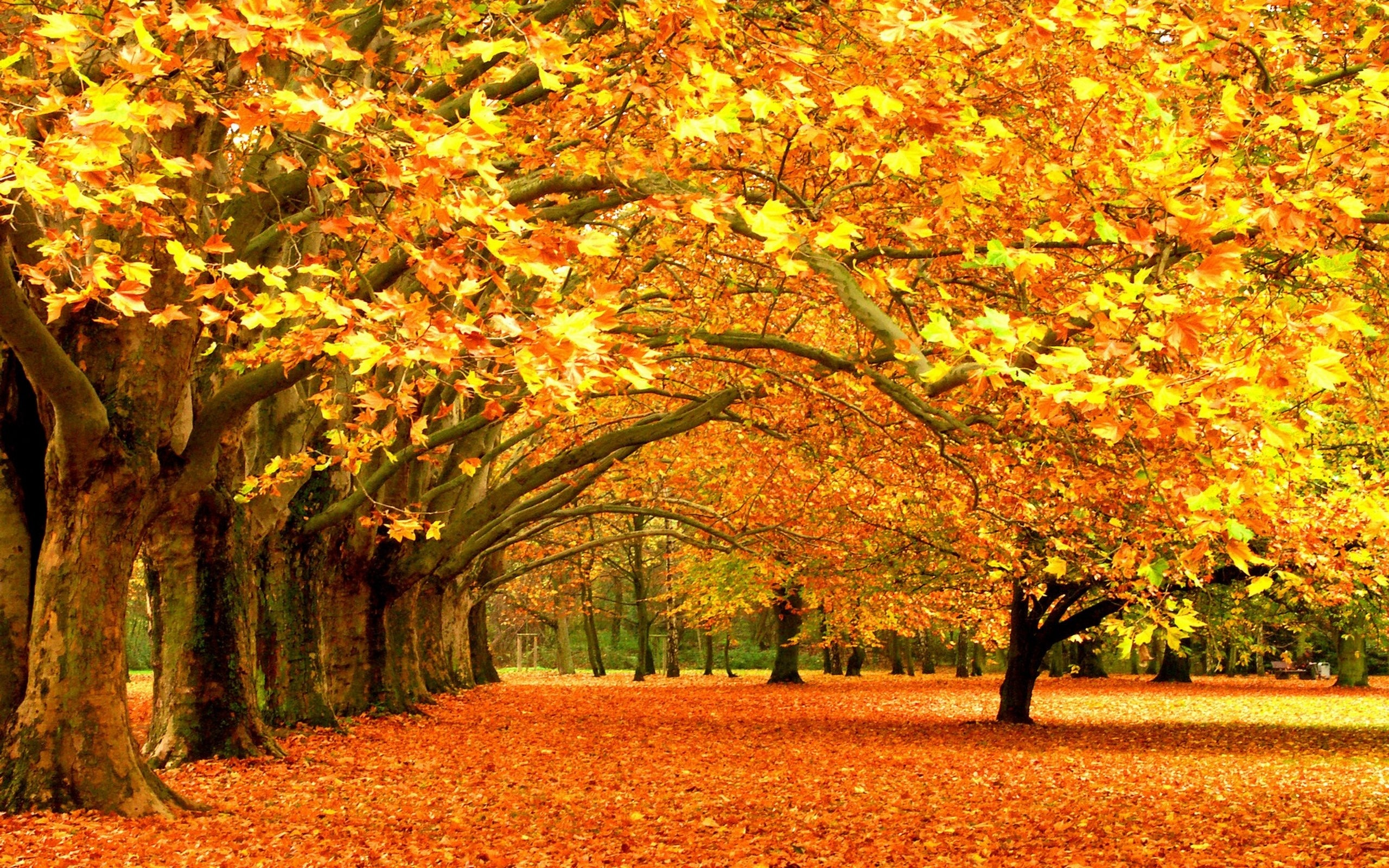 Картинки красивые с осенью